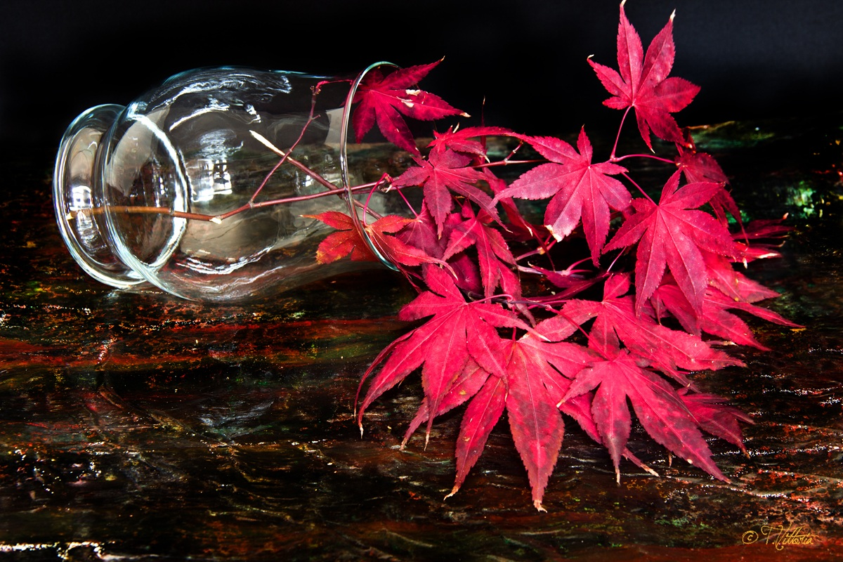 Red maple...
