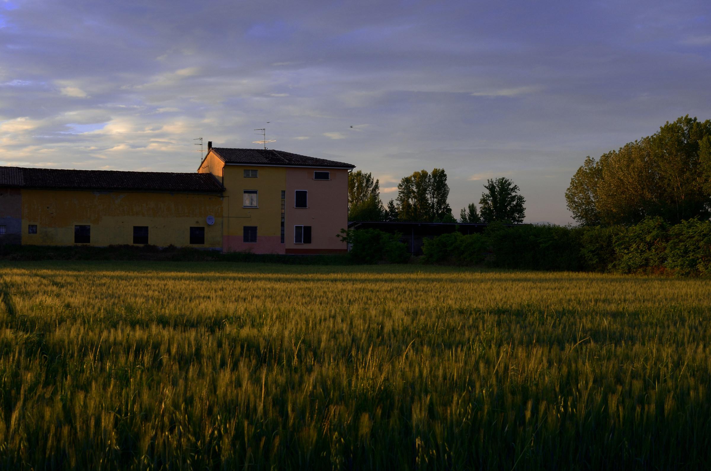 Sunset on the Grain...
