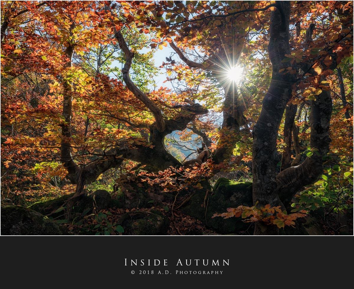 Inside Autumn...