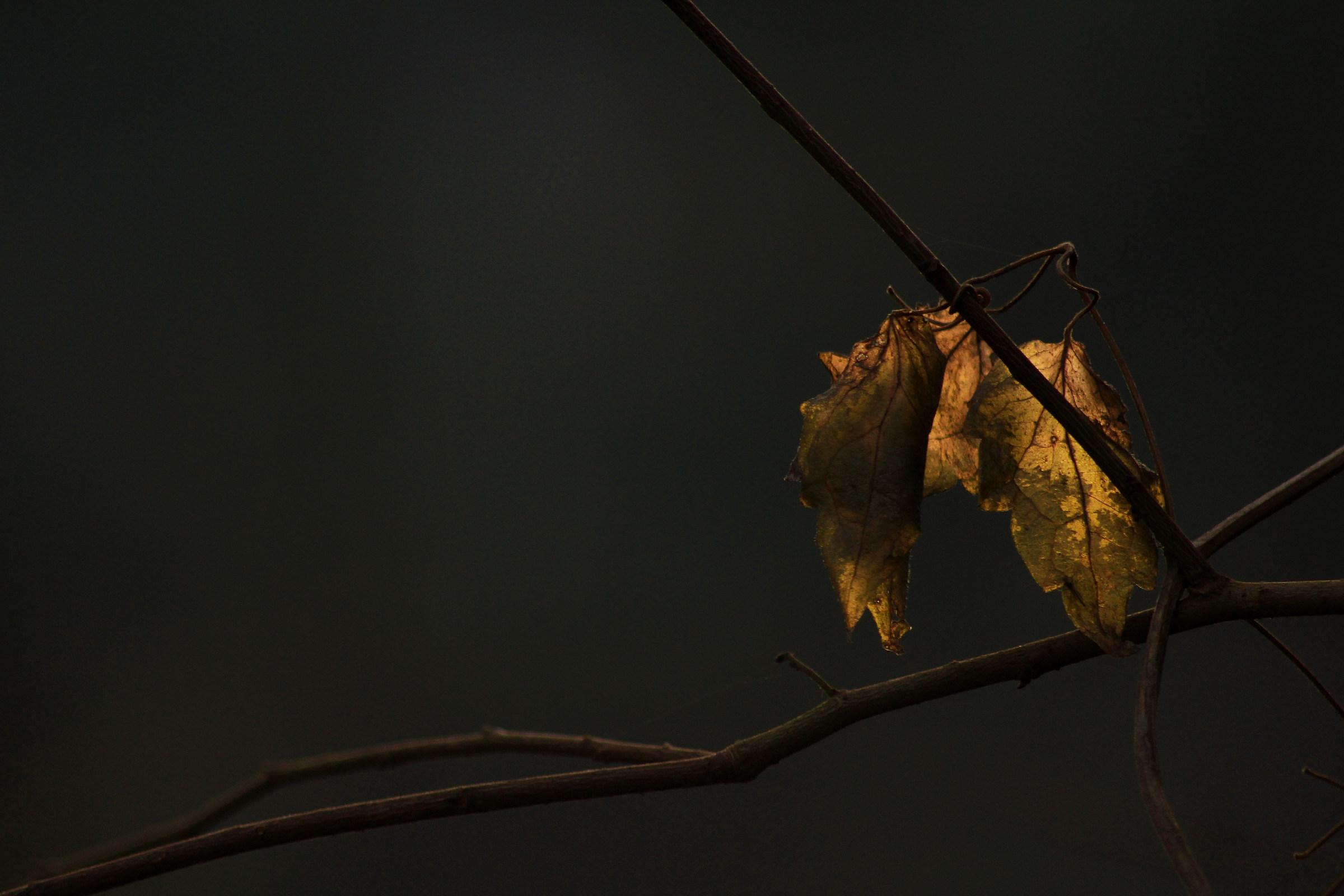 Autumn Light......