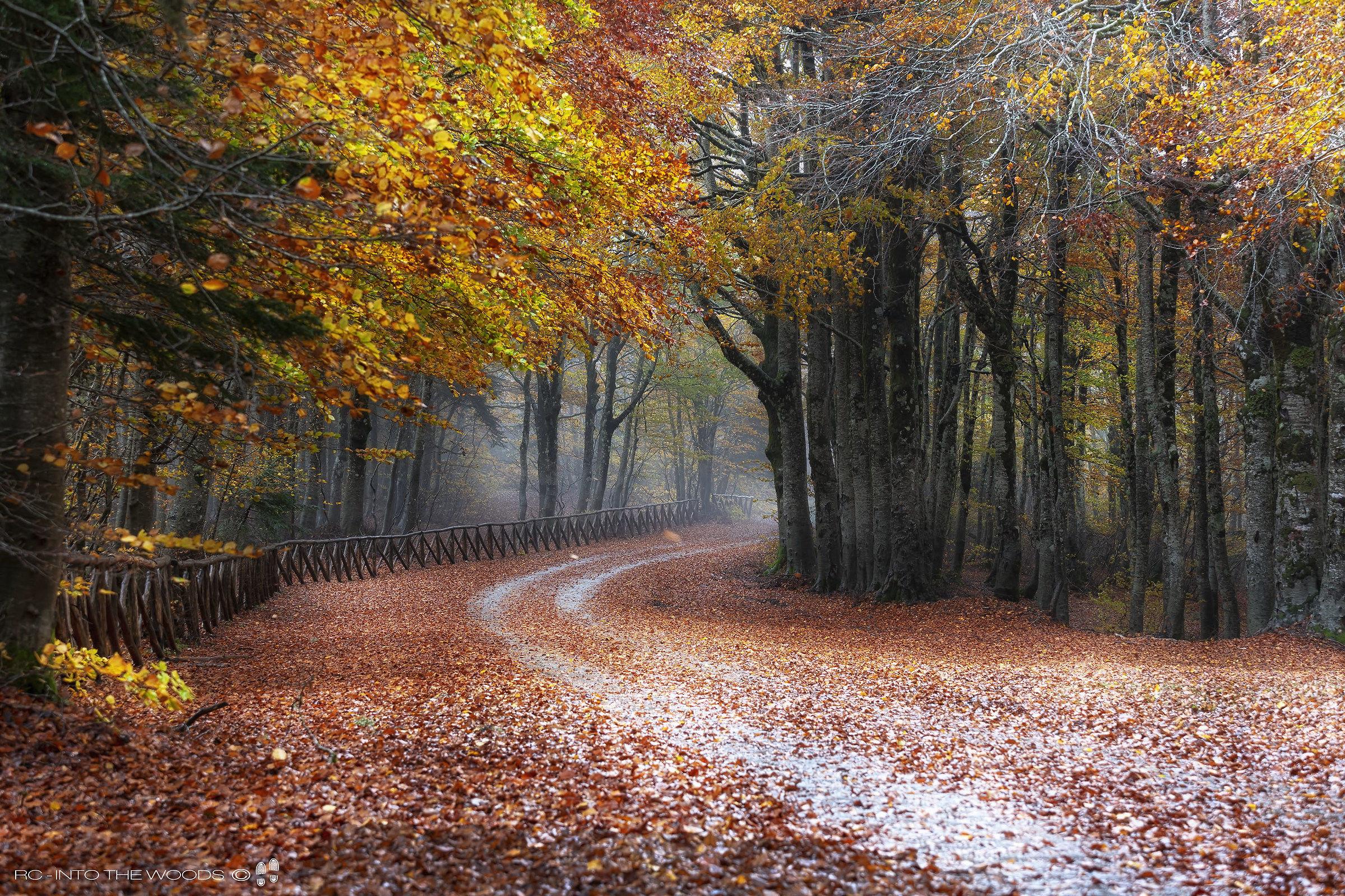 Straight to Autumn...
