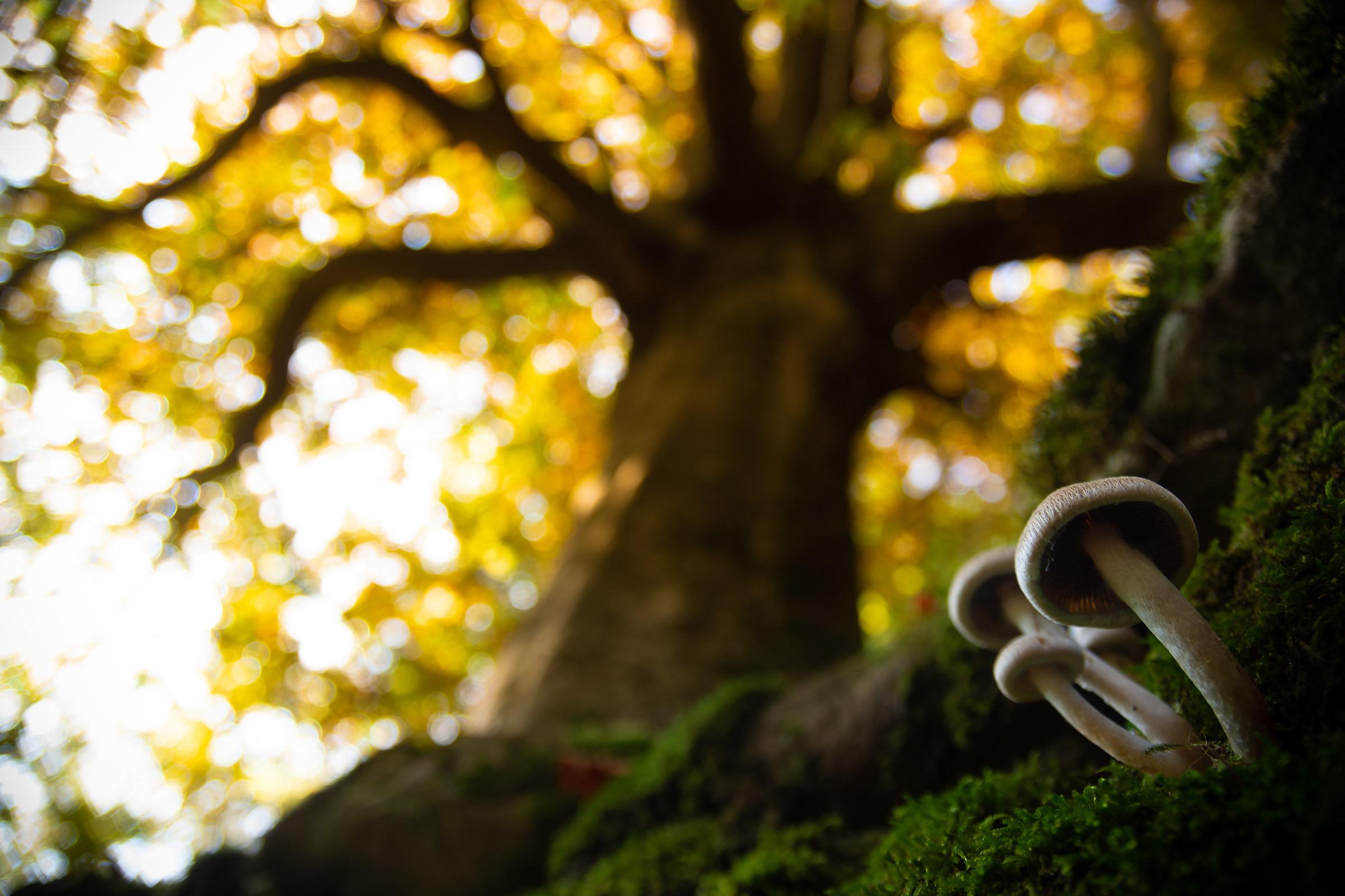 Autumn Mushrooms...