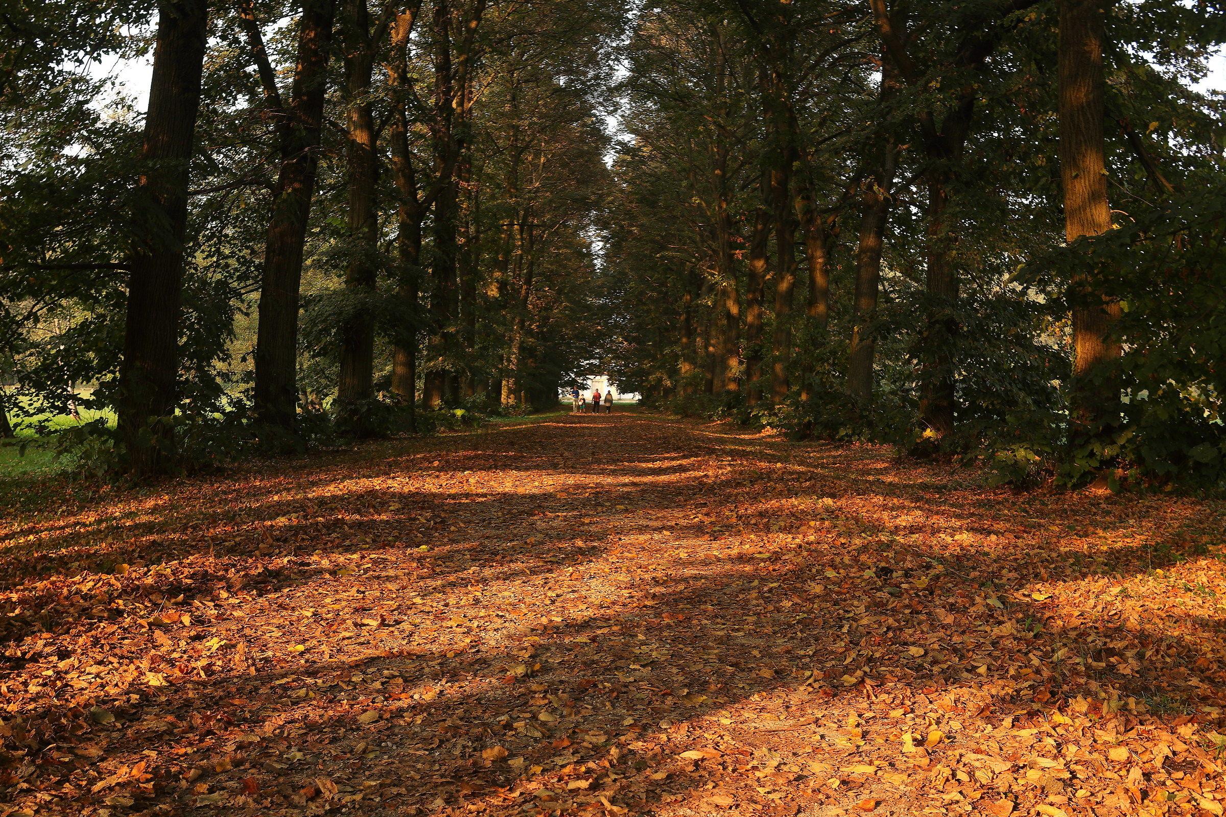 Autumn Carpet...