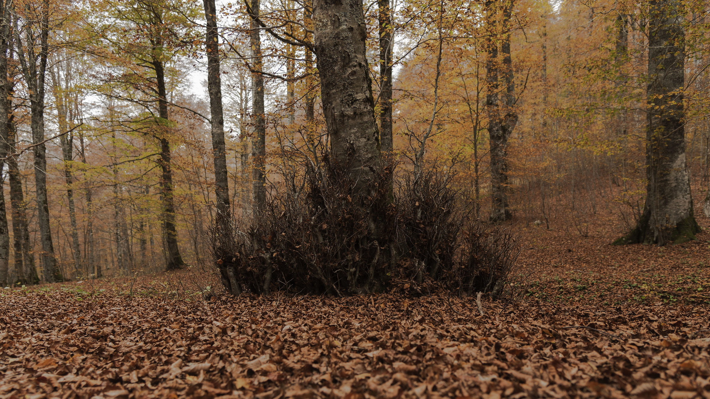 Forest in late October...