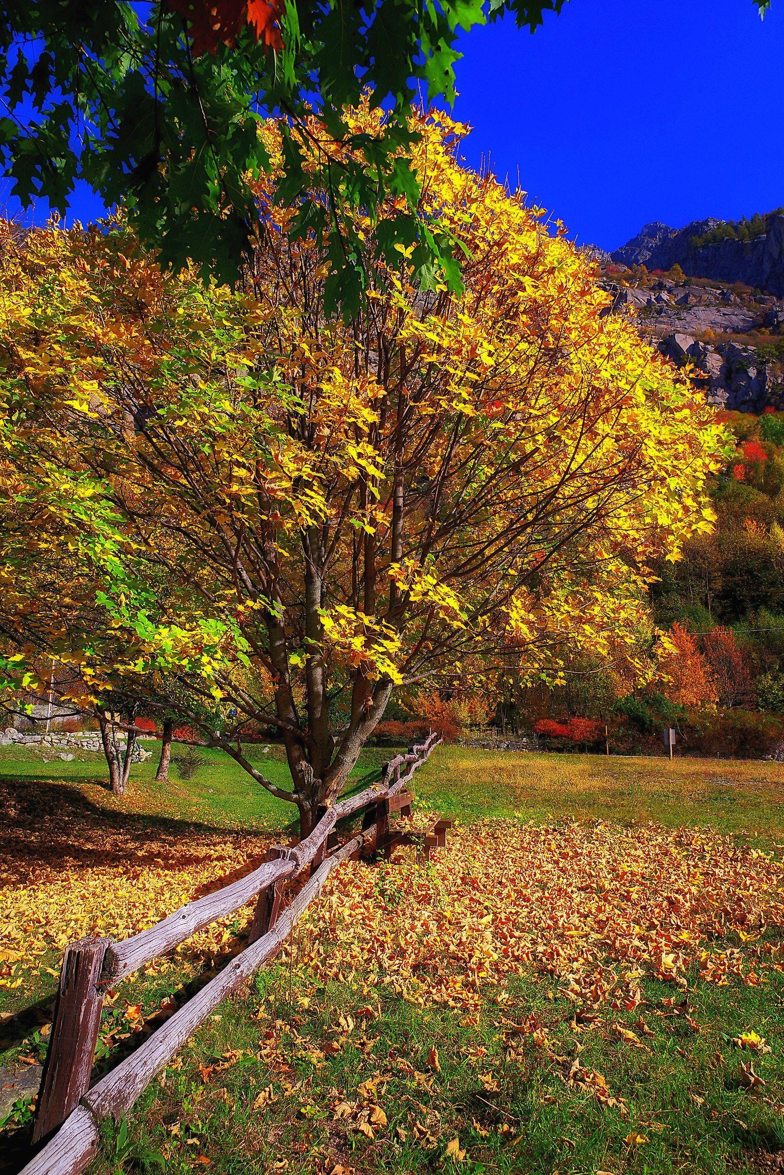 Autumn Yellow...