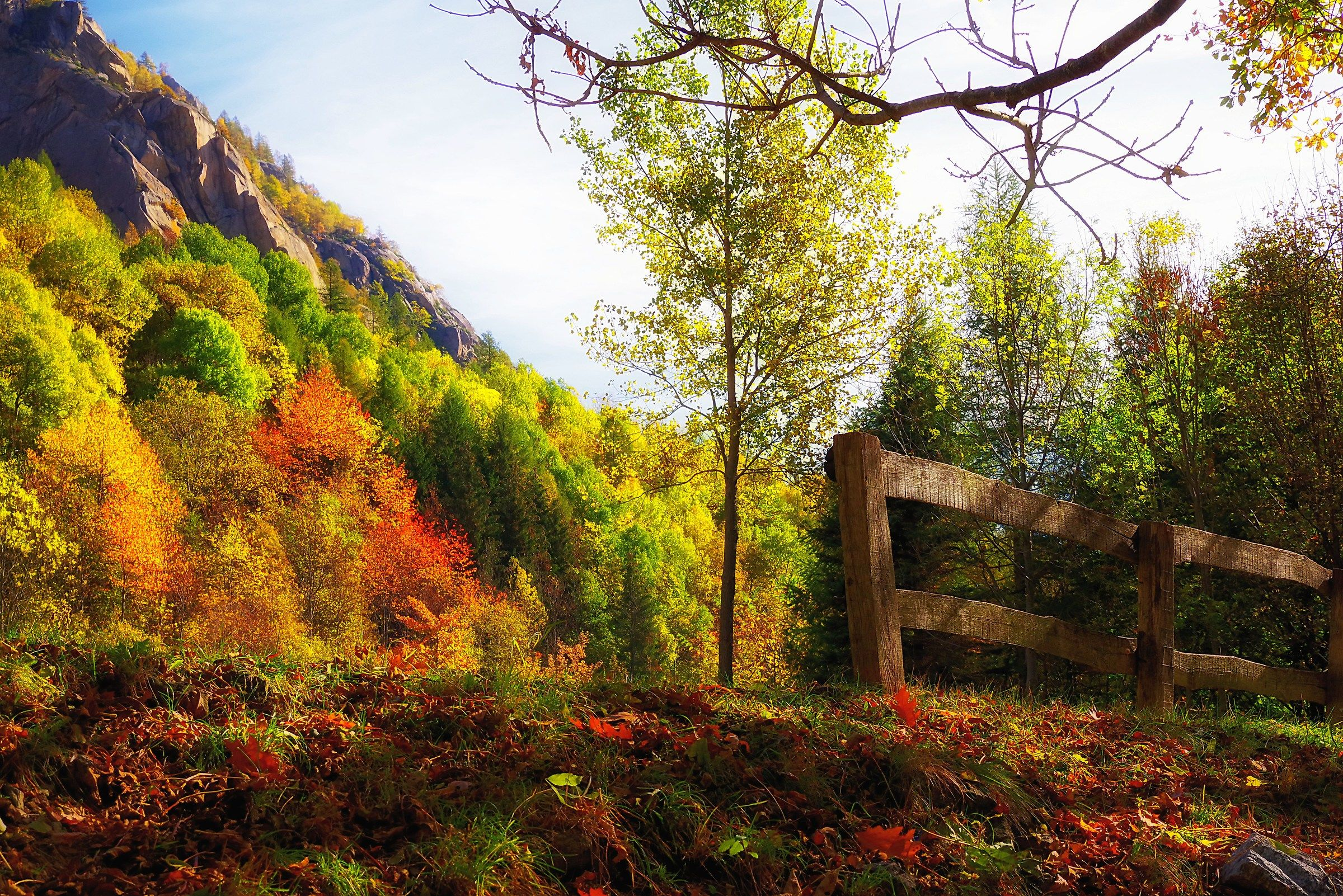 Autumn Palette...