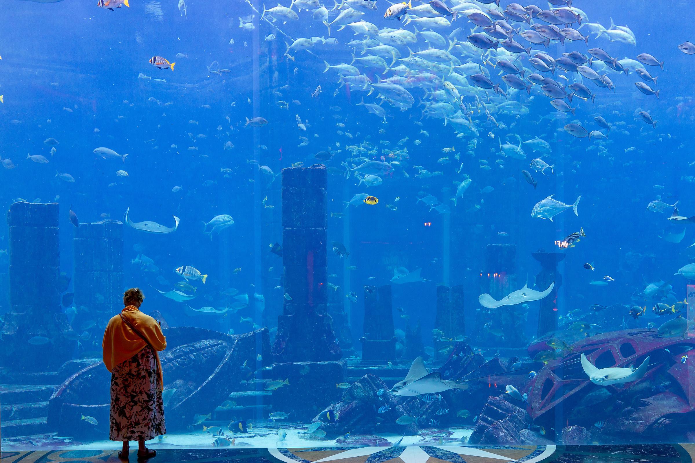 Aquarium Dubai...