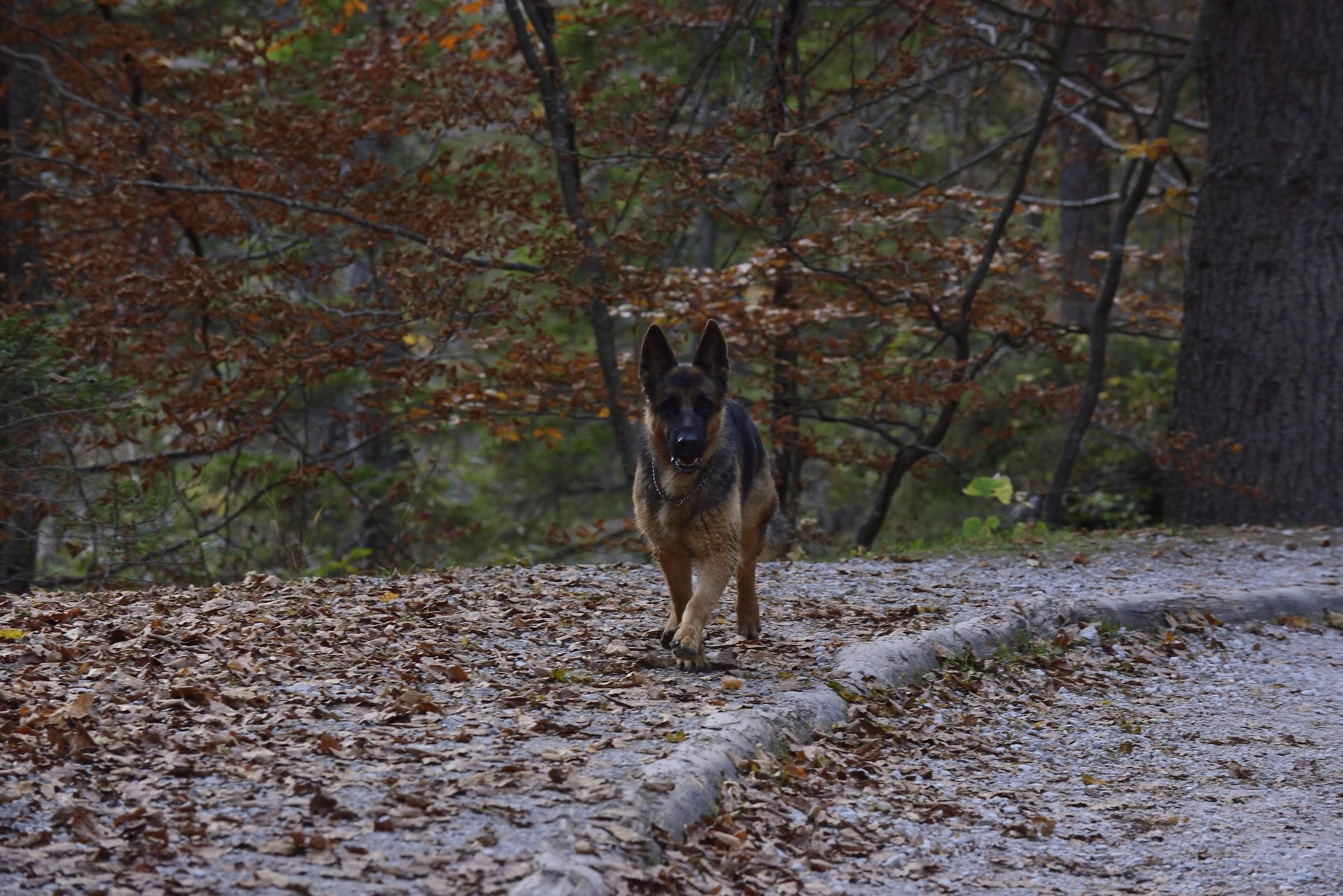 My faithful companion to walk...