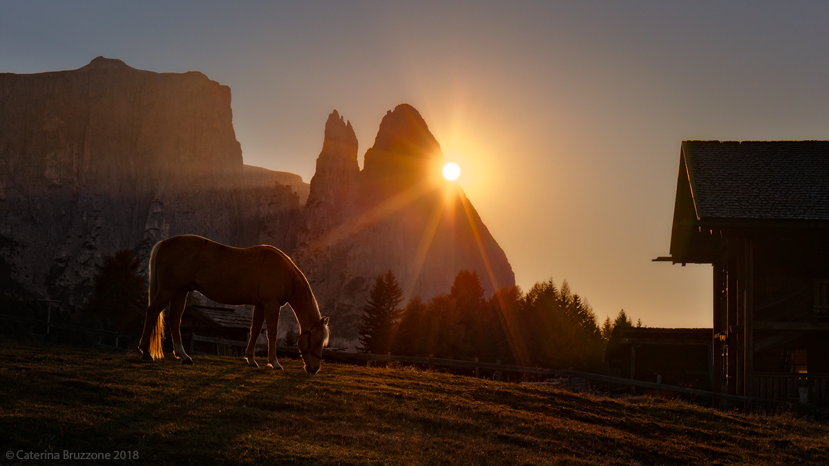 The Horse of Siusi...