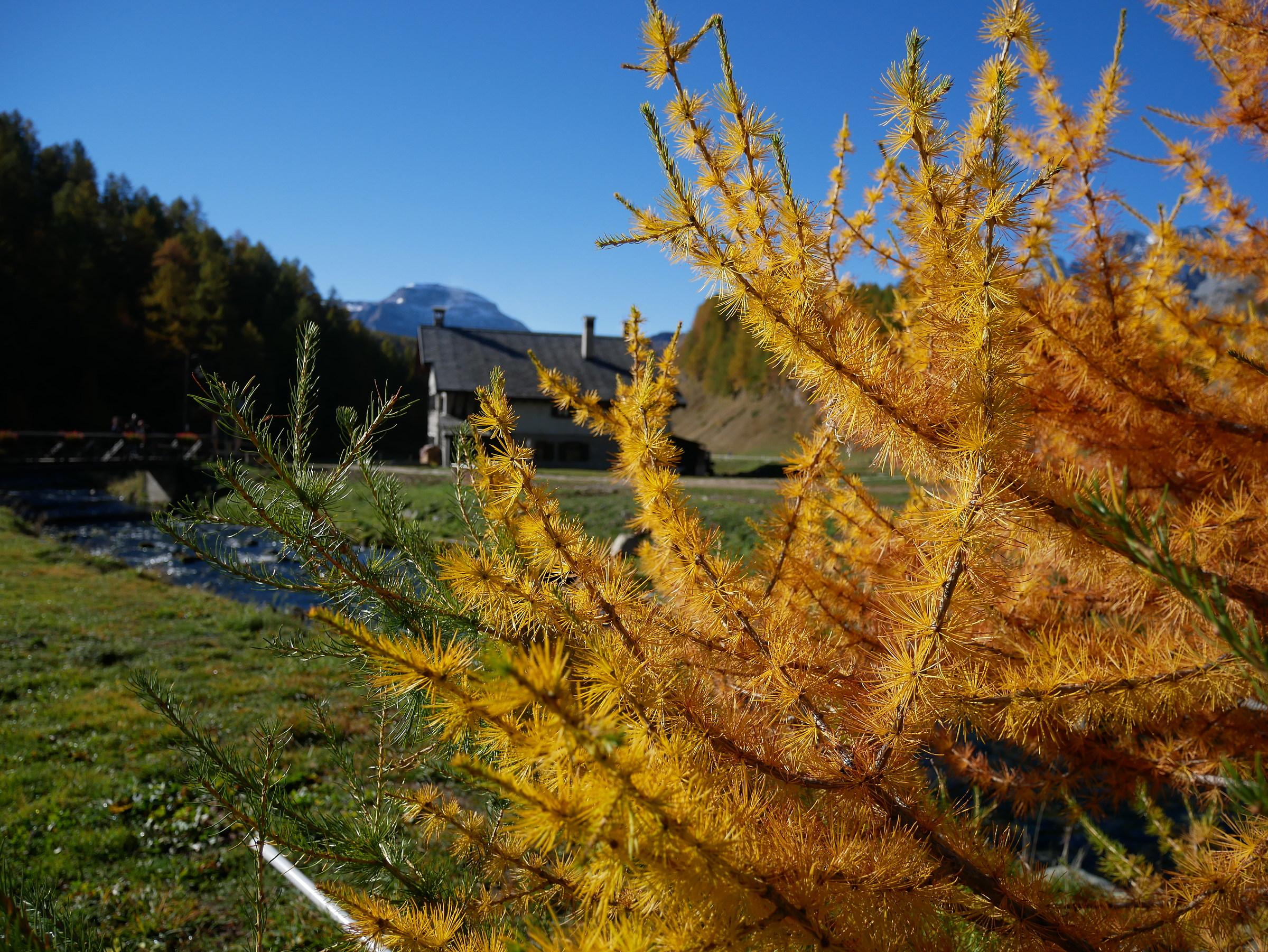 Oro d'autunno...