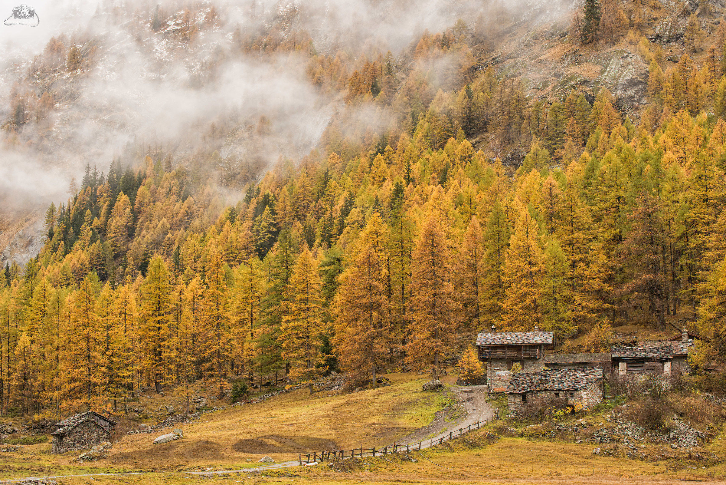 Foliage in Valnontey (ao)...