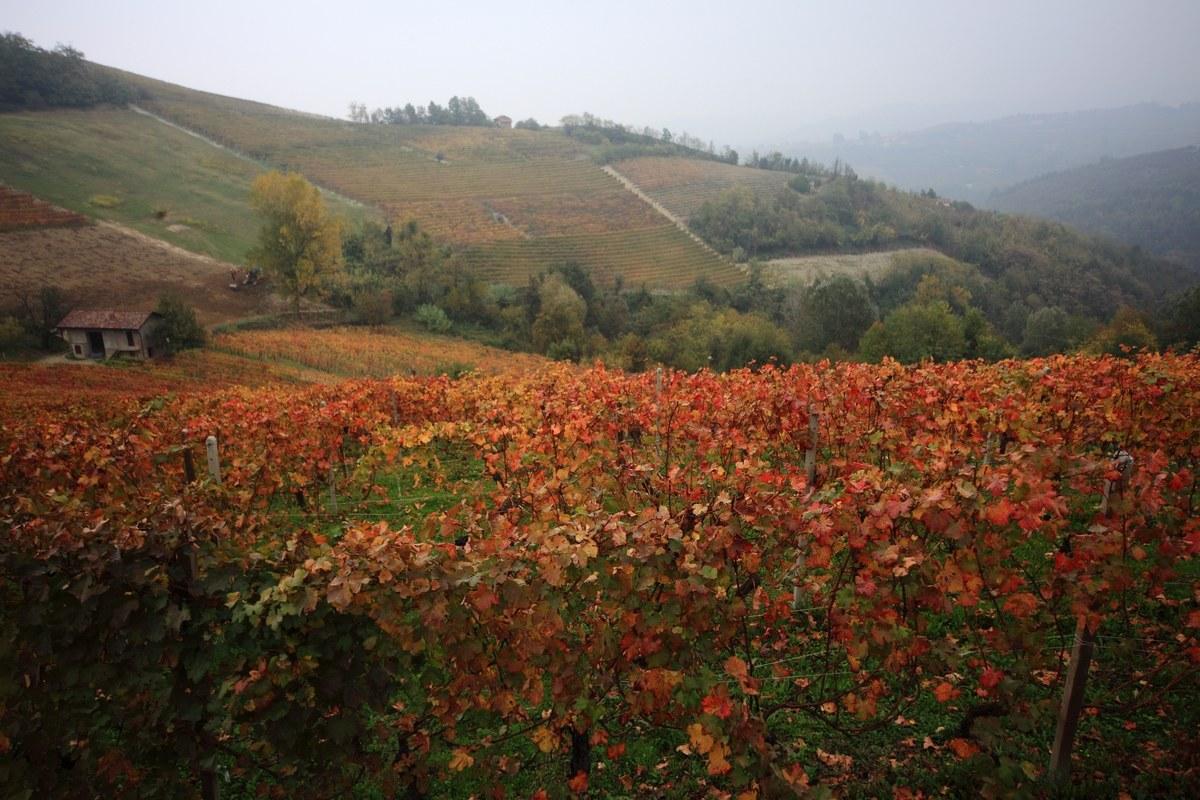 Autumn contrasts...