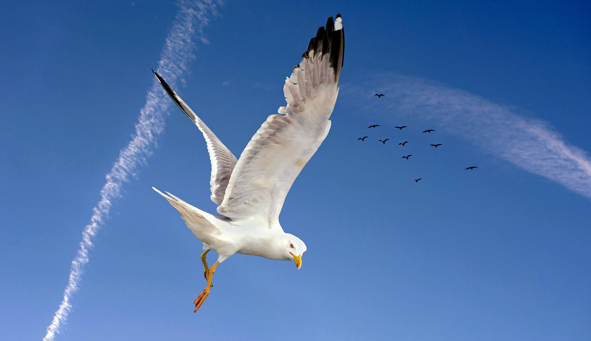 Seagull (25% of the original photo)...