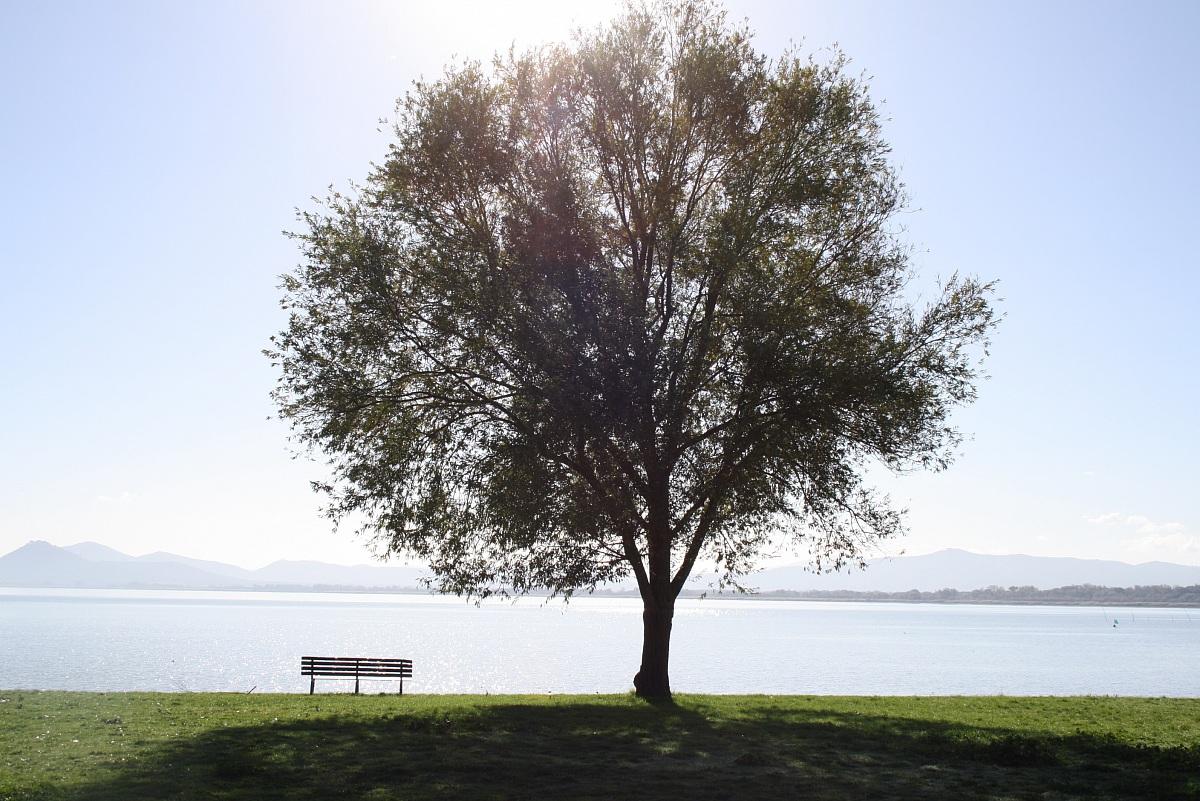 lonely tree...