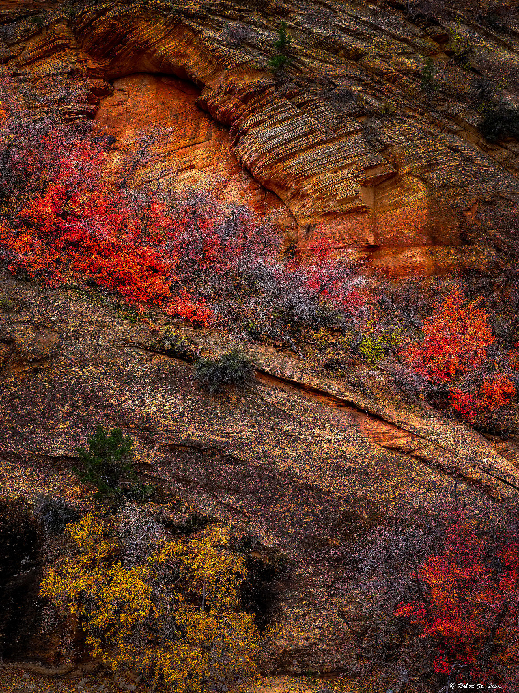 Zion National Park...
