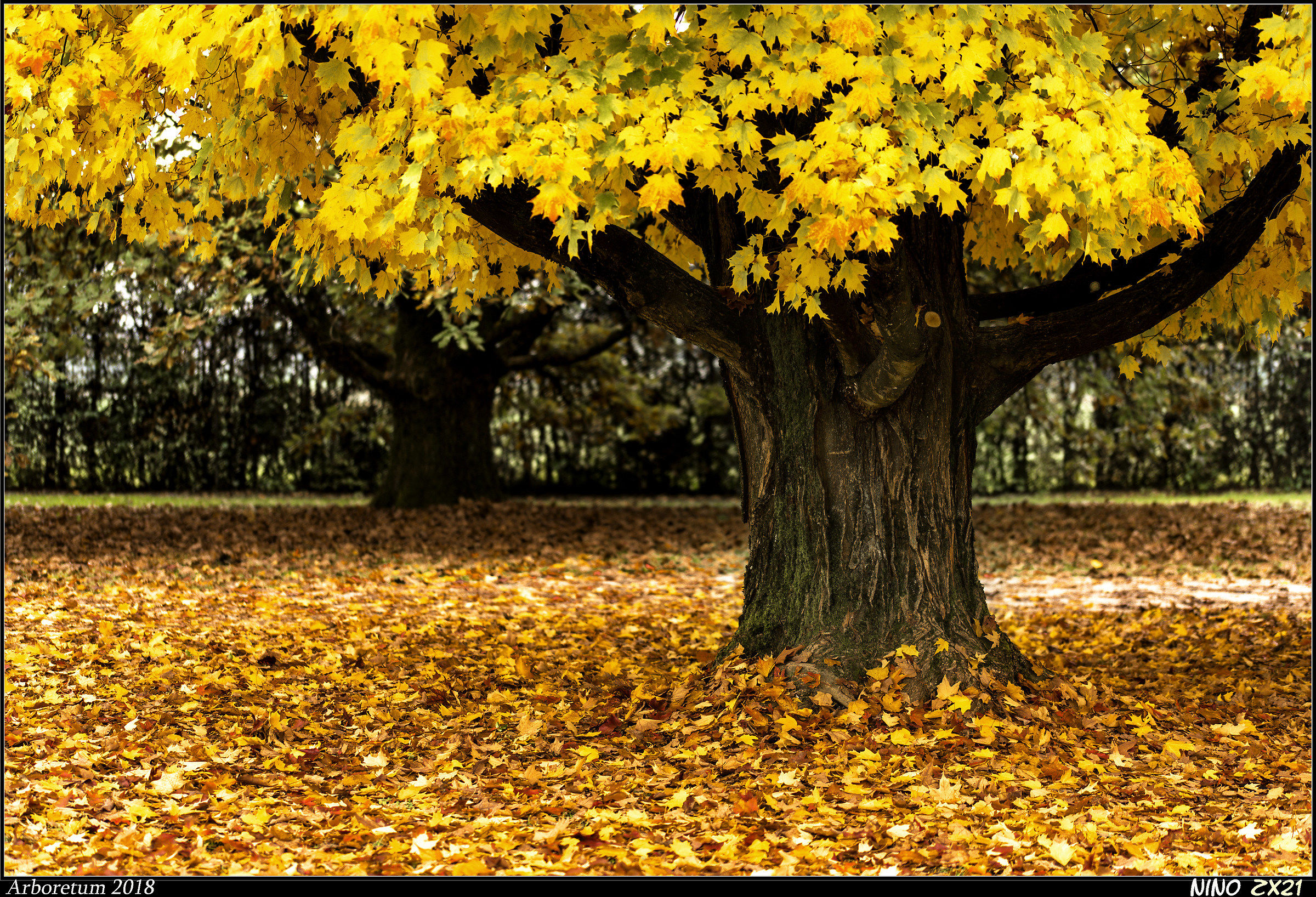 In pieno autunno II°...