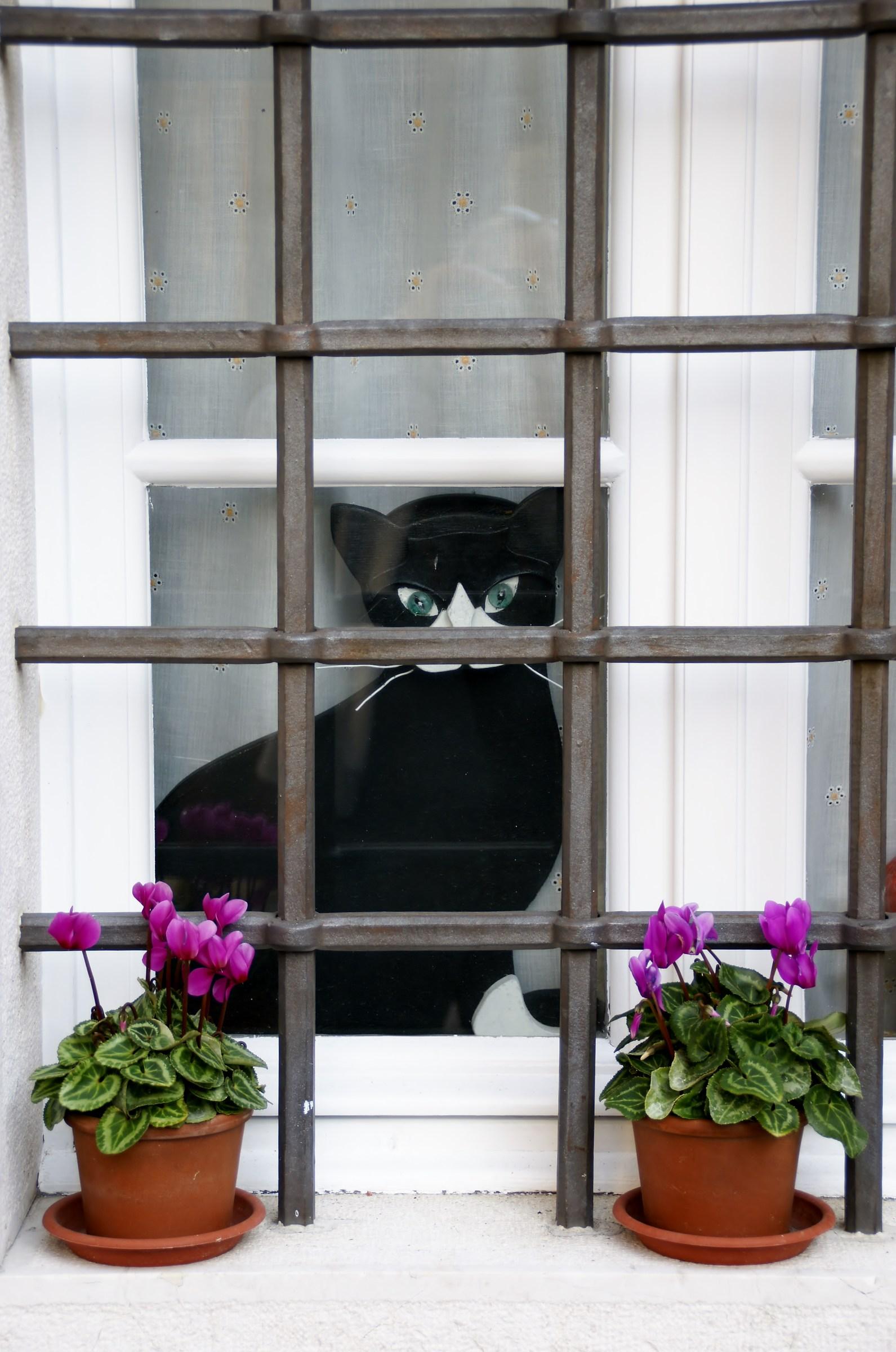 Miao Miao...