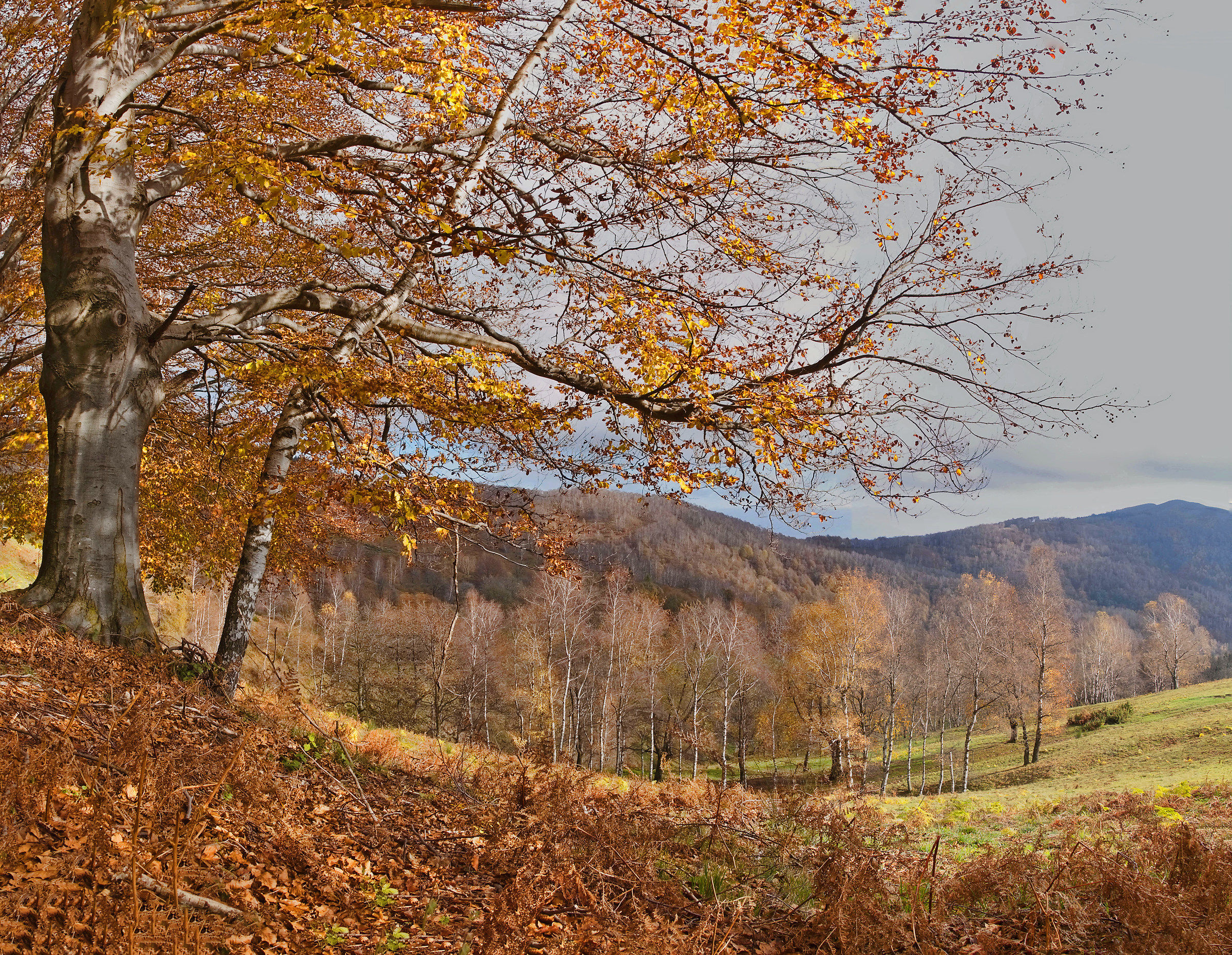 Autumn in the mountains...