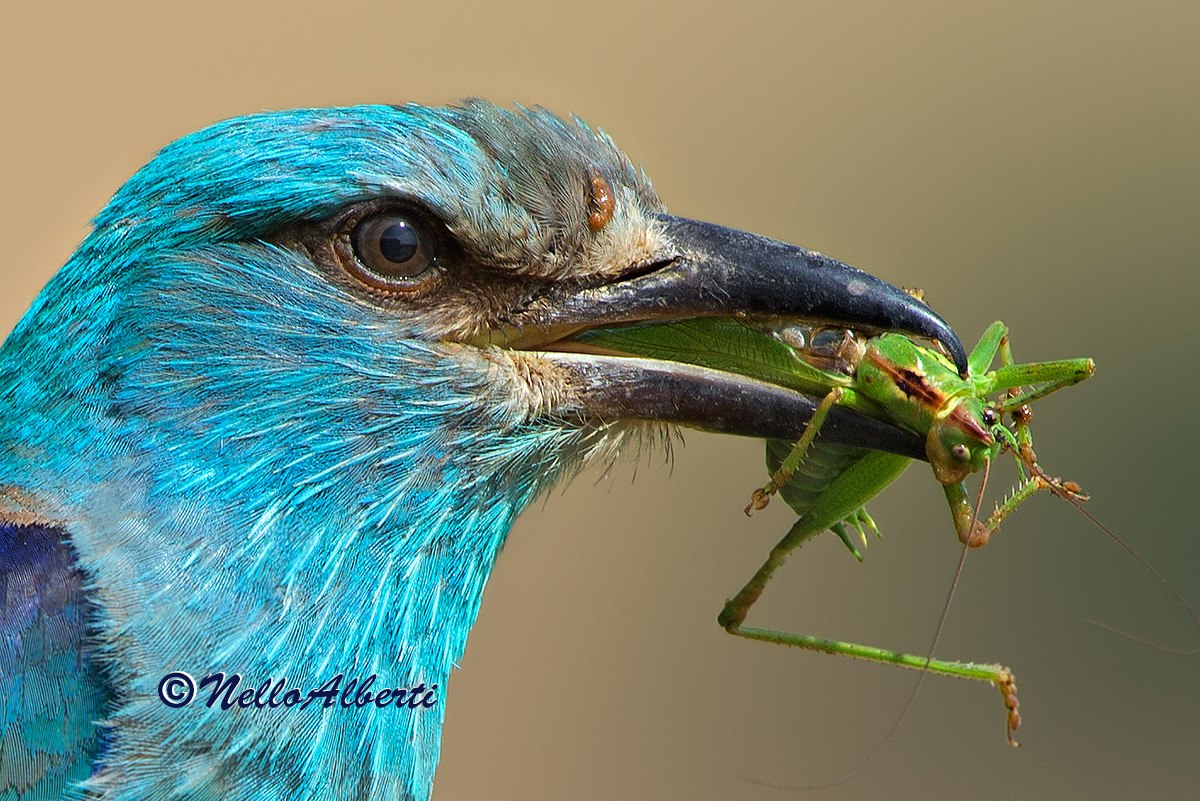 particular the jay with green insect...
