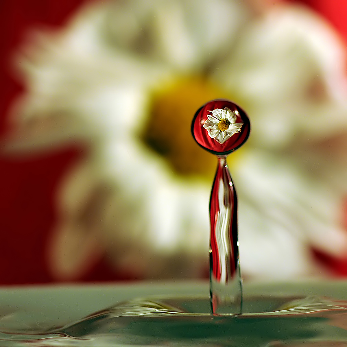 The flower in the drop...