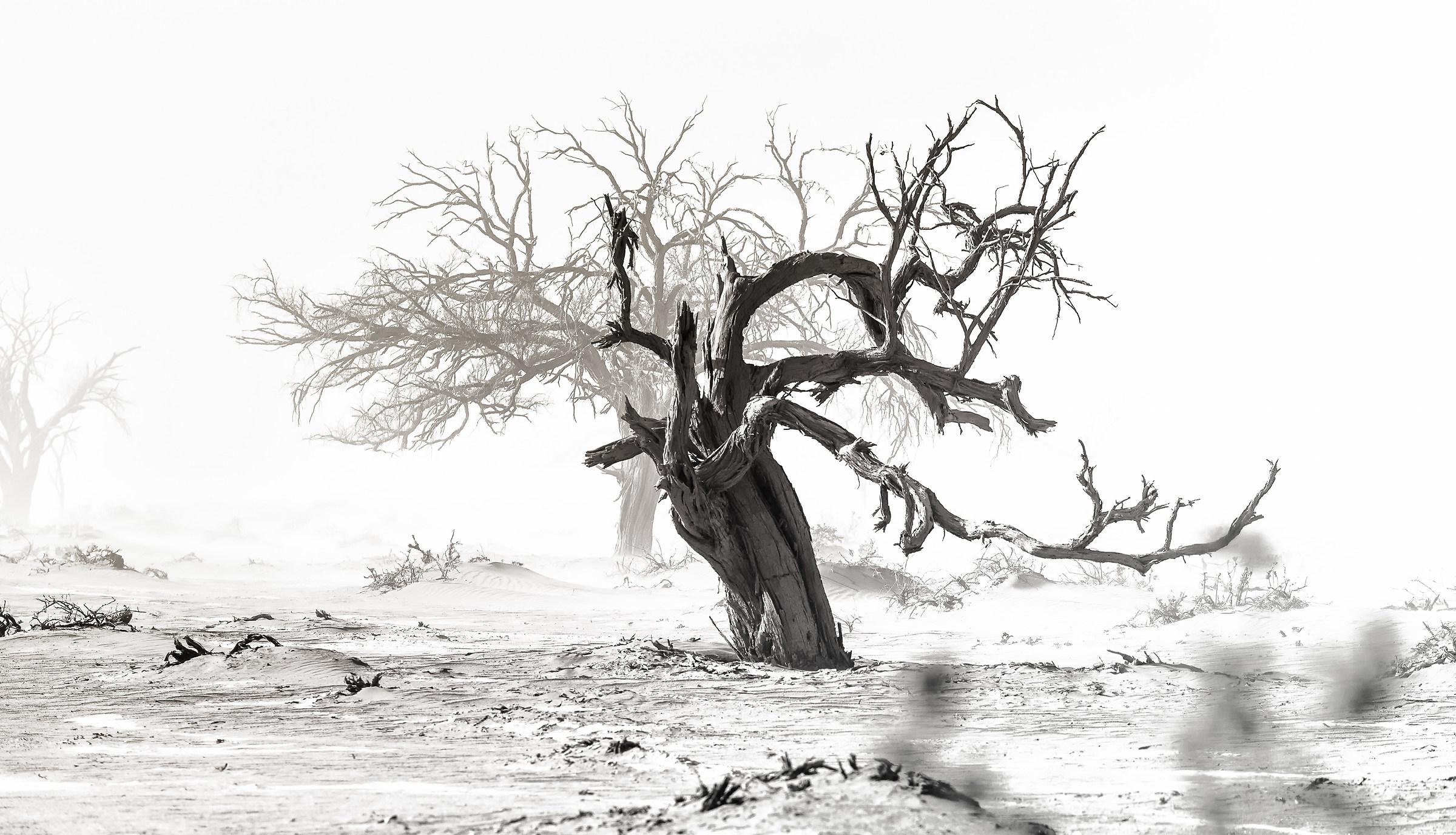 Resistere all'indomabile tempesta di sabbia...