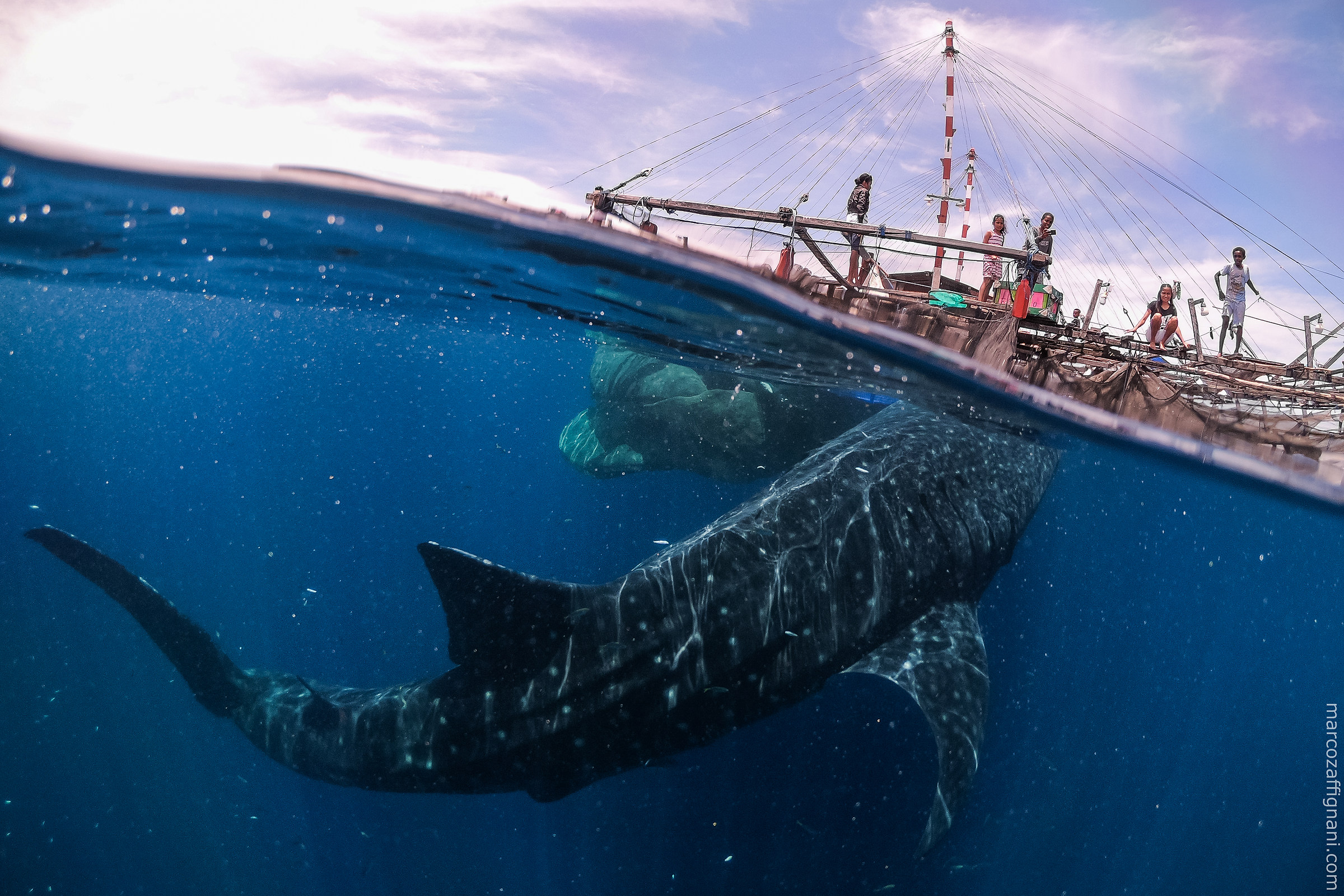 Meeting with whale sharks in West Papua...