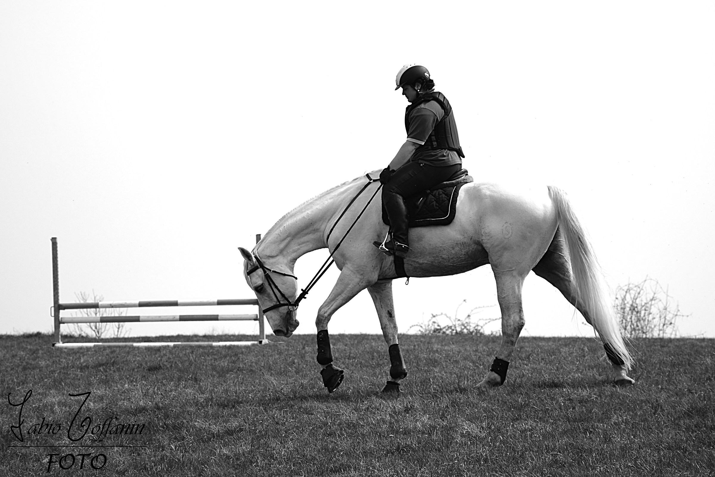Quando il tuo cavallo sbaglia, chiedigli scusa....
