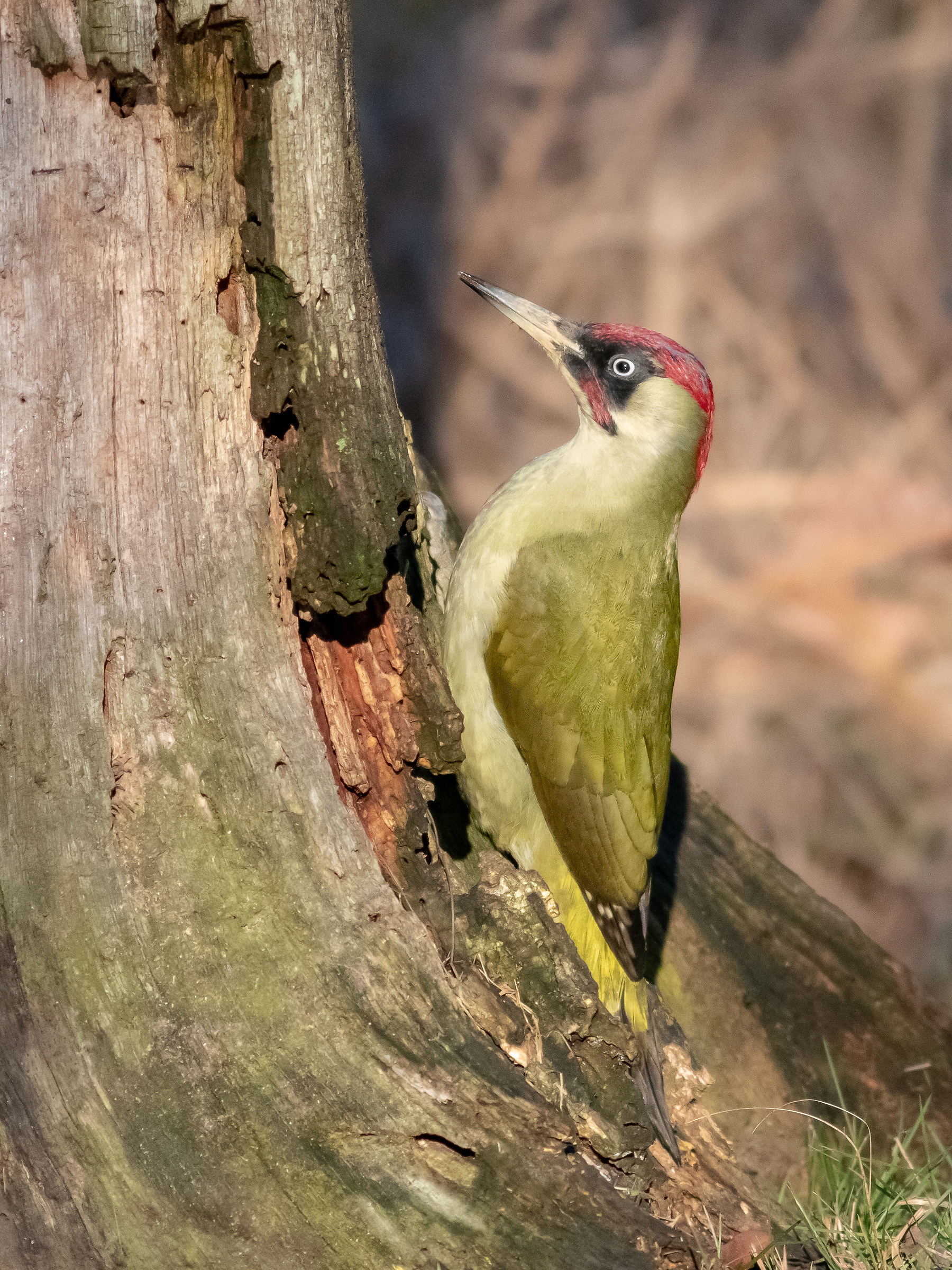 Green Woodpeckers...
