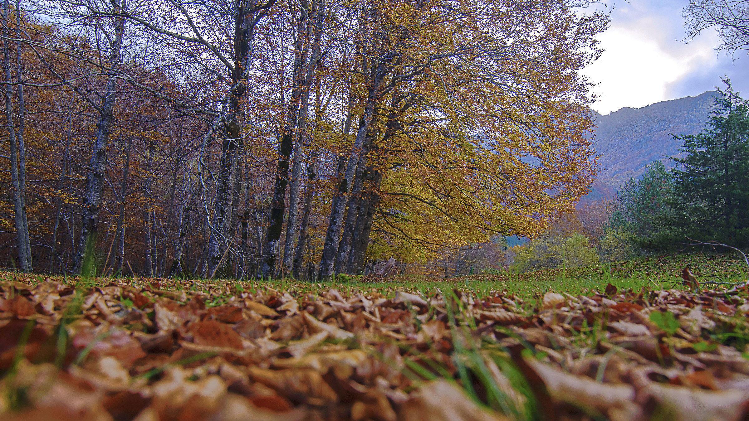 Leaves at the Camosciara...