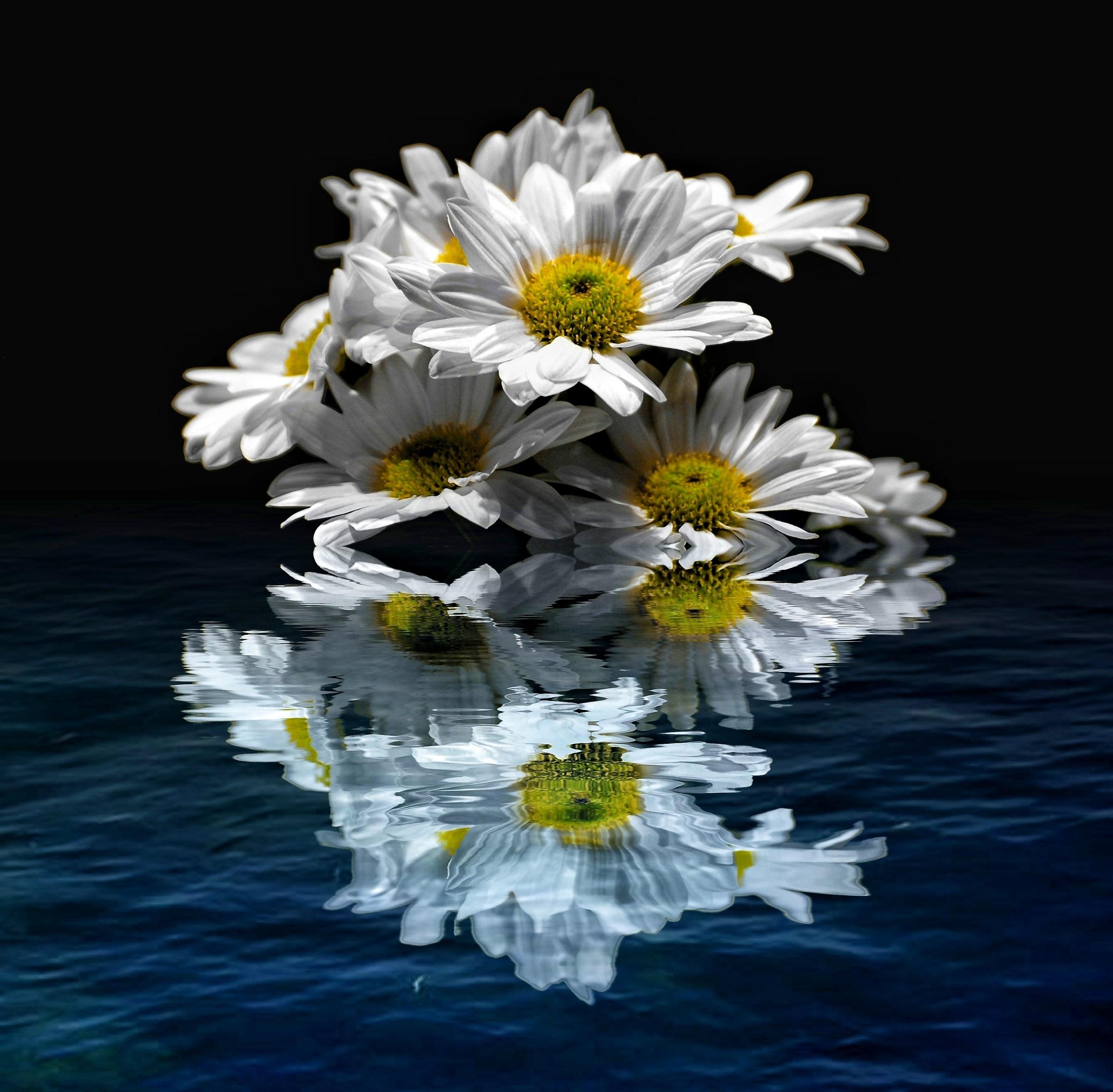 Reflected Daisies 2...