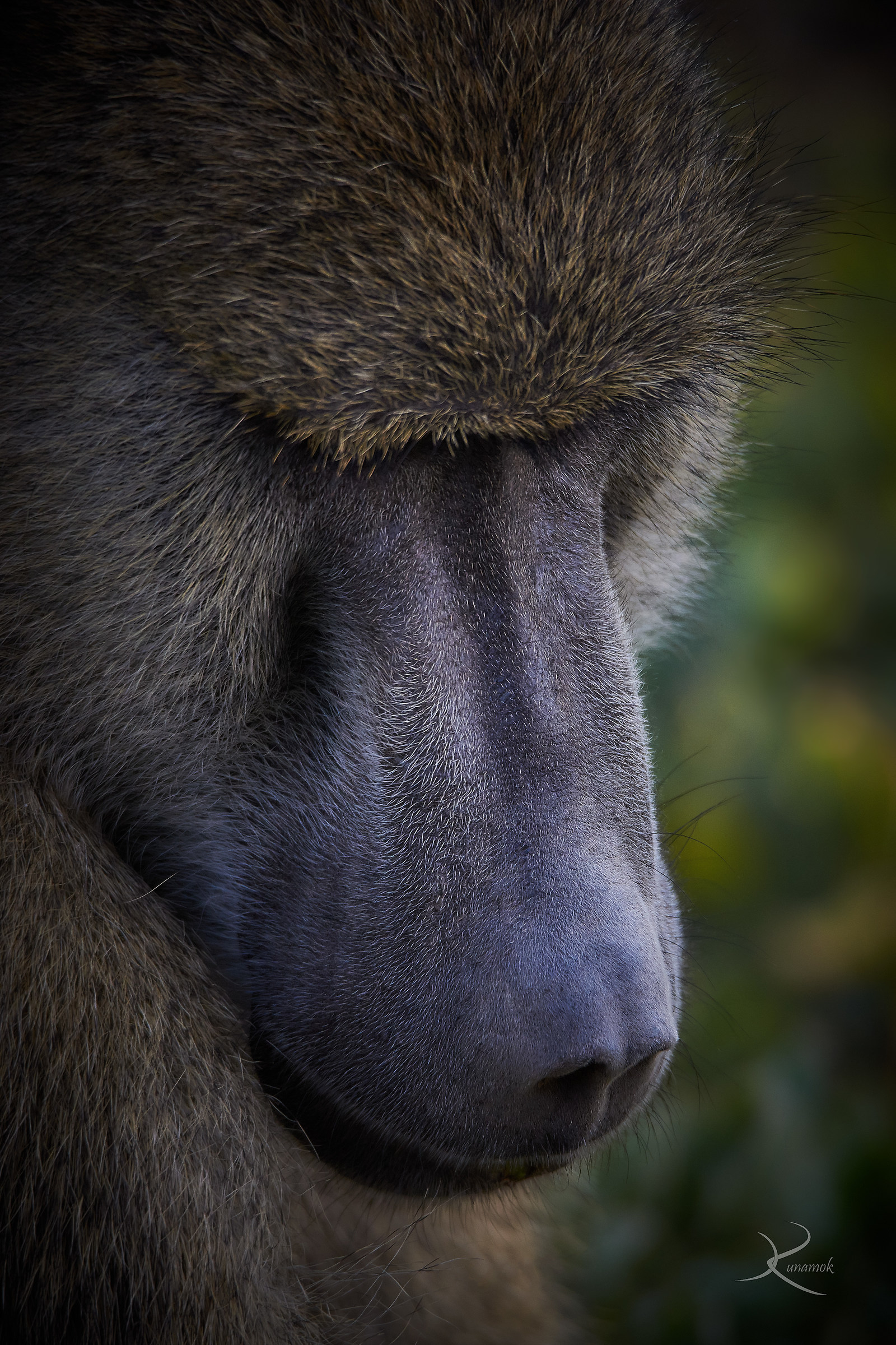 Baboon...