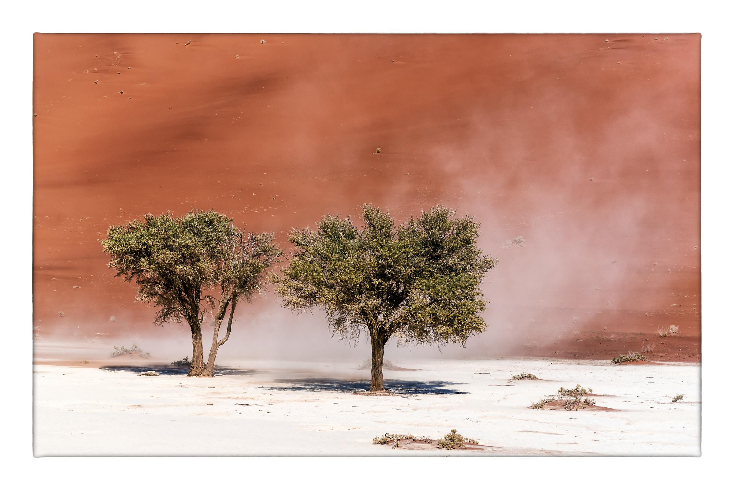 Il deserto imbiancato dal vento...