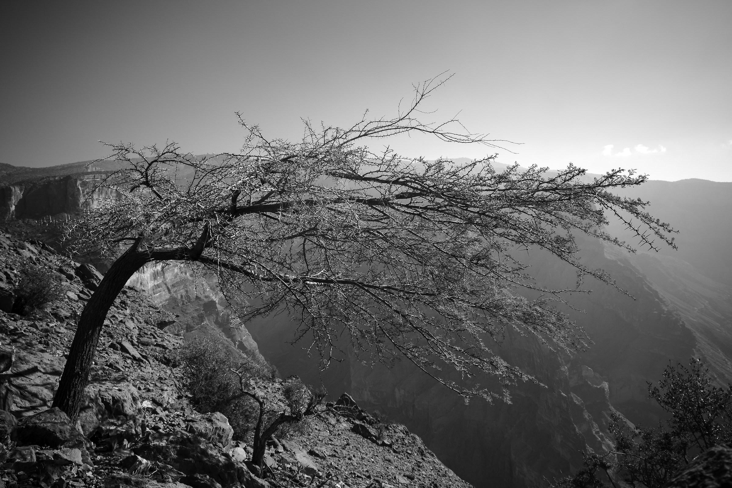 Ritratto di un albero...