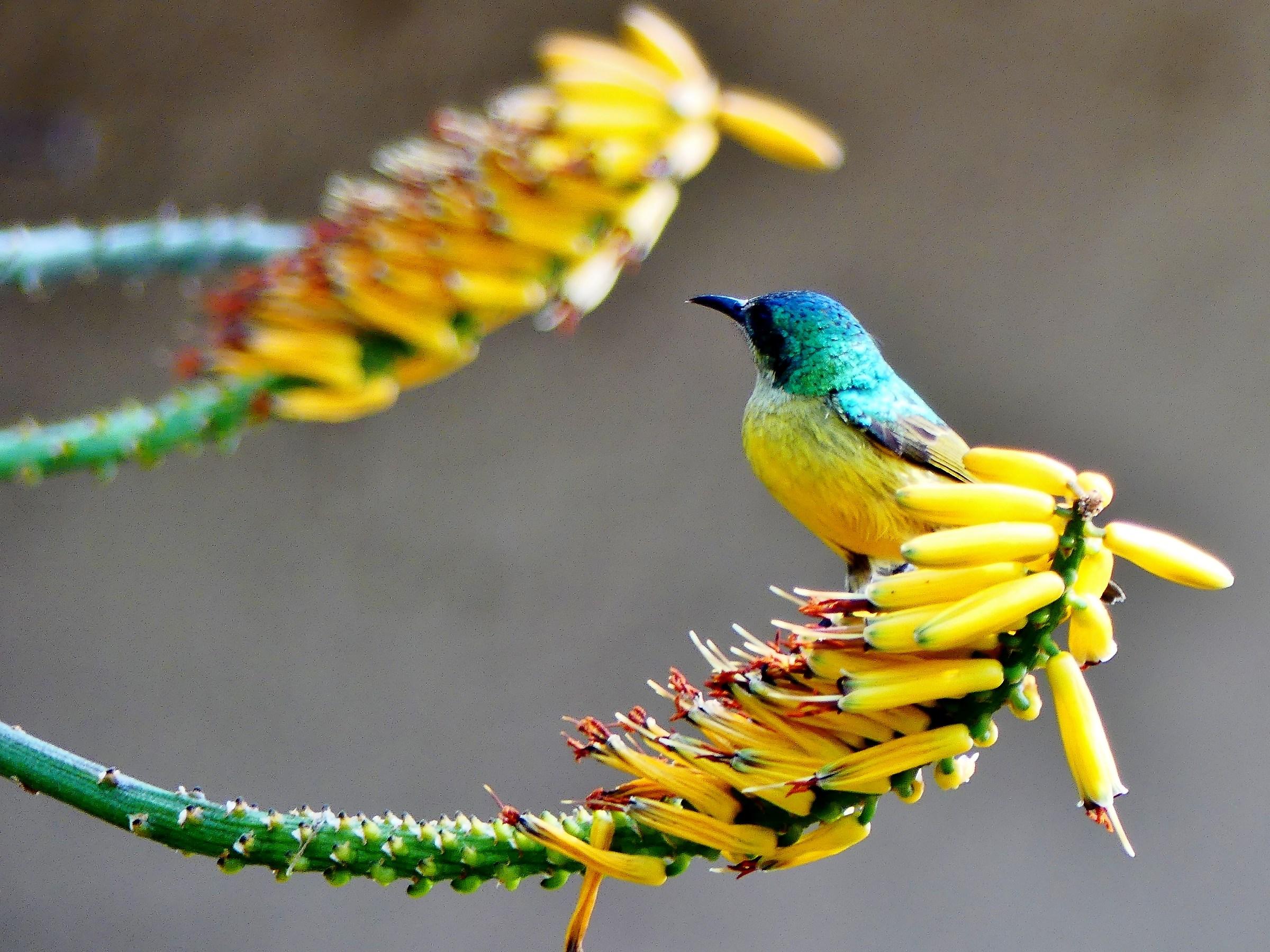 Uccellino mimetico...
