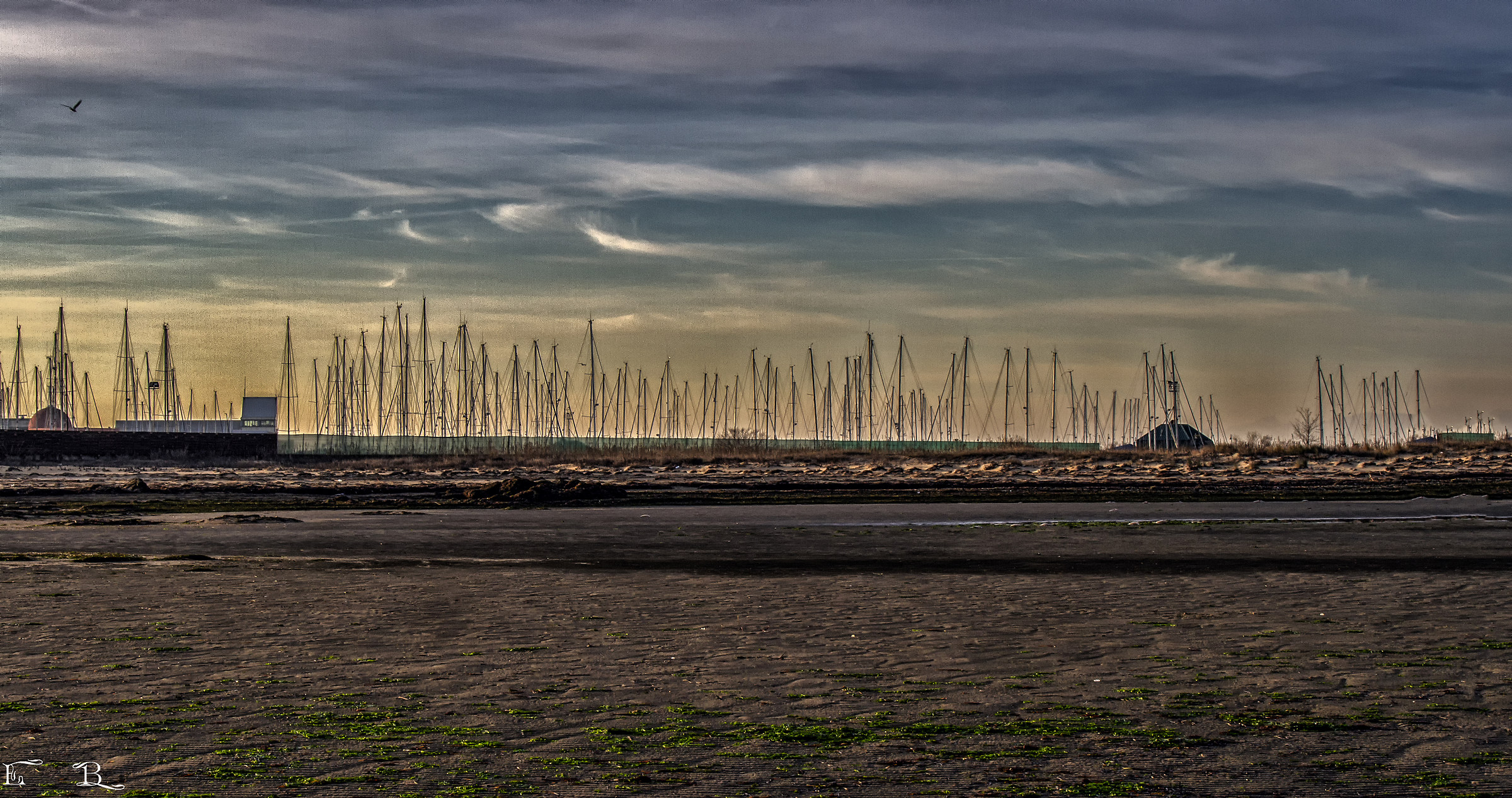 Lignano Sabbiadoro (UD)-trees on the sea....