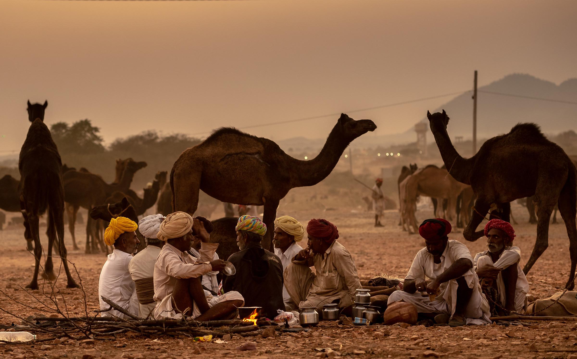 cammellieri a Pushkar...