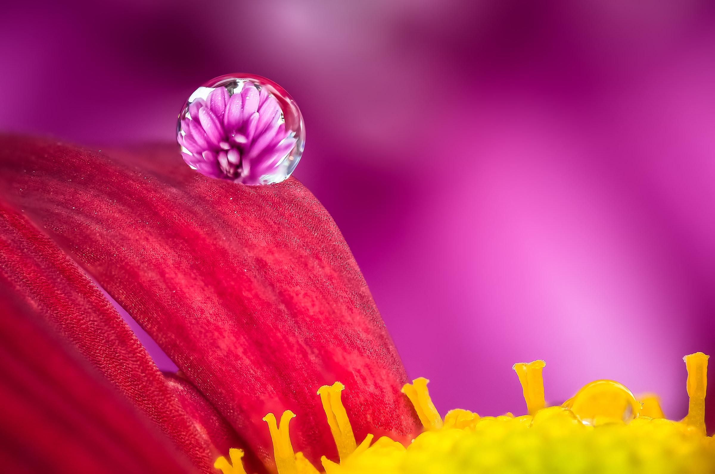 Drops Flowers Gocce Fiori Riflessi Mario jr Nicorelli...