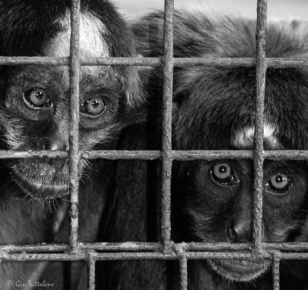 Torment of captivity...