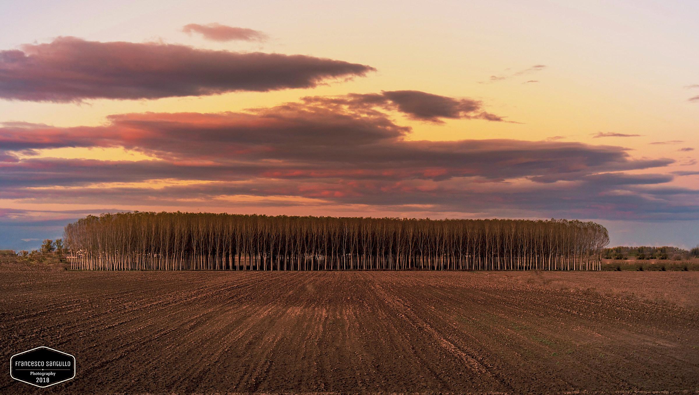 Sunset on Poplars...