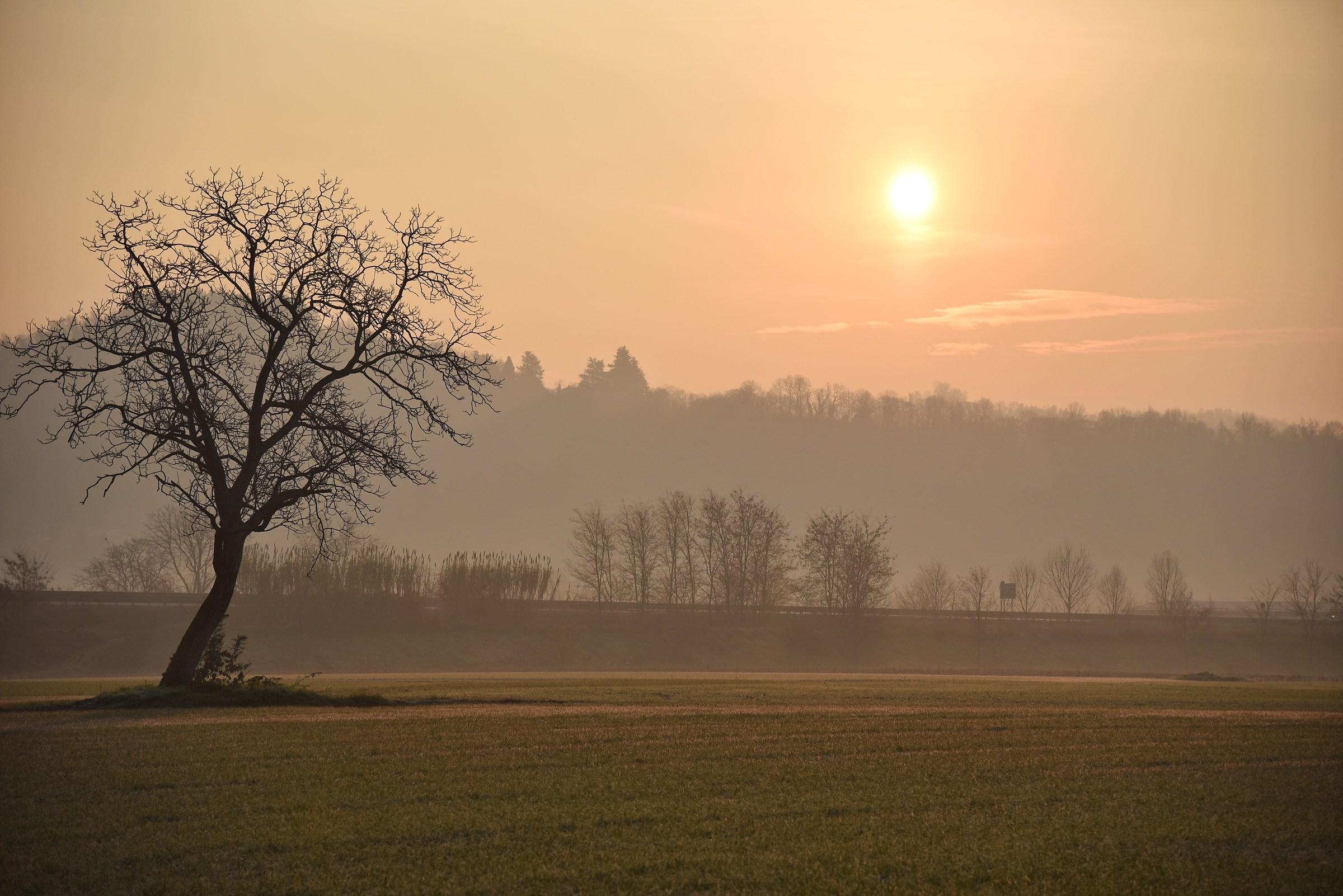 Sun and tree...