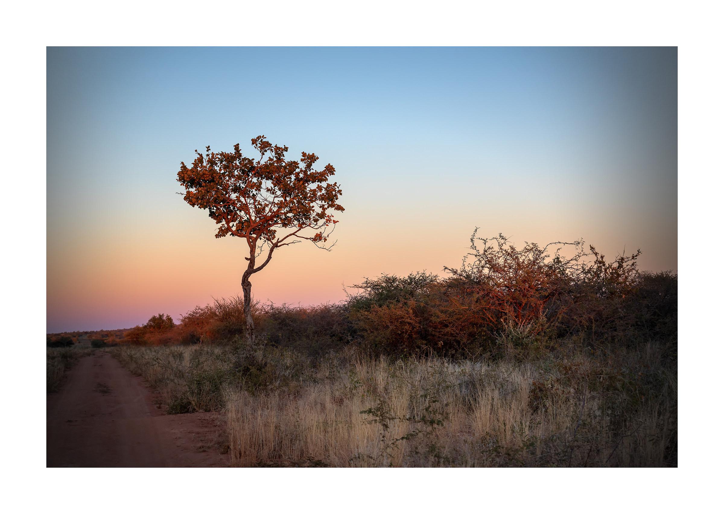 Rosso... Afrika!...