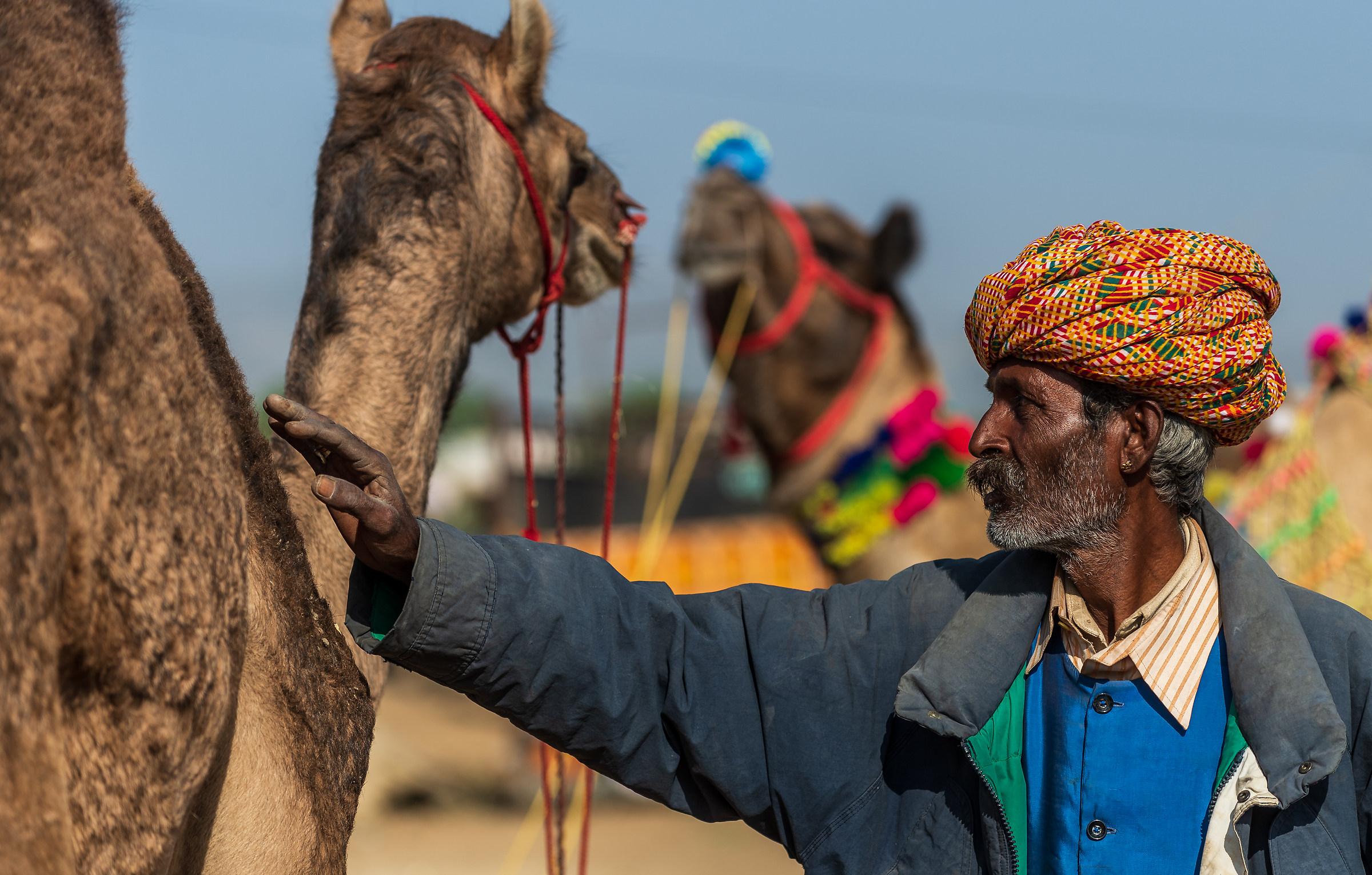 Il cammelliere e il suo cammello...