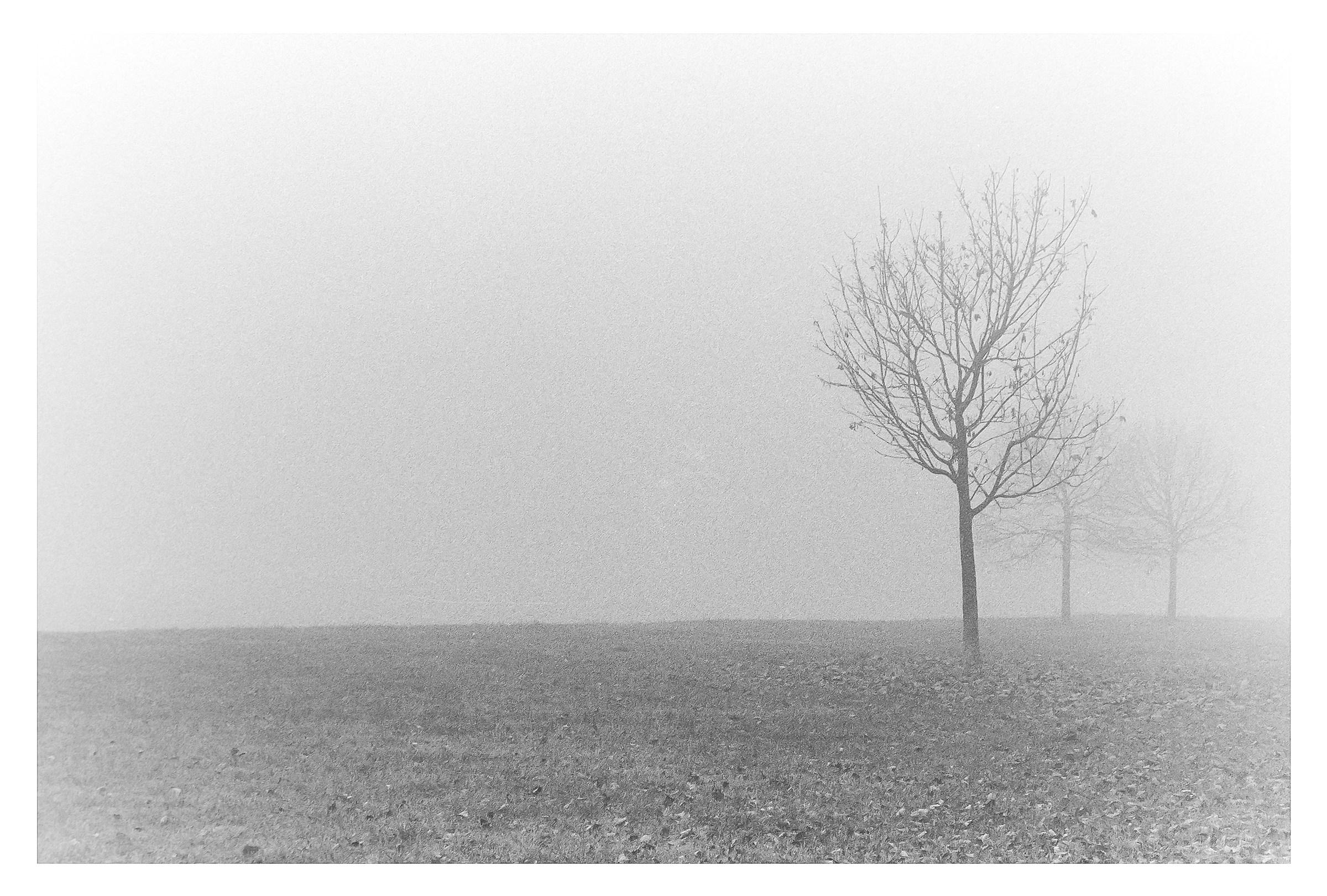 Tre alberi .. e tanta nebbia !!...
