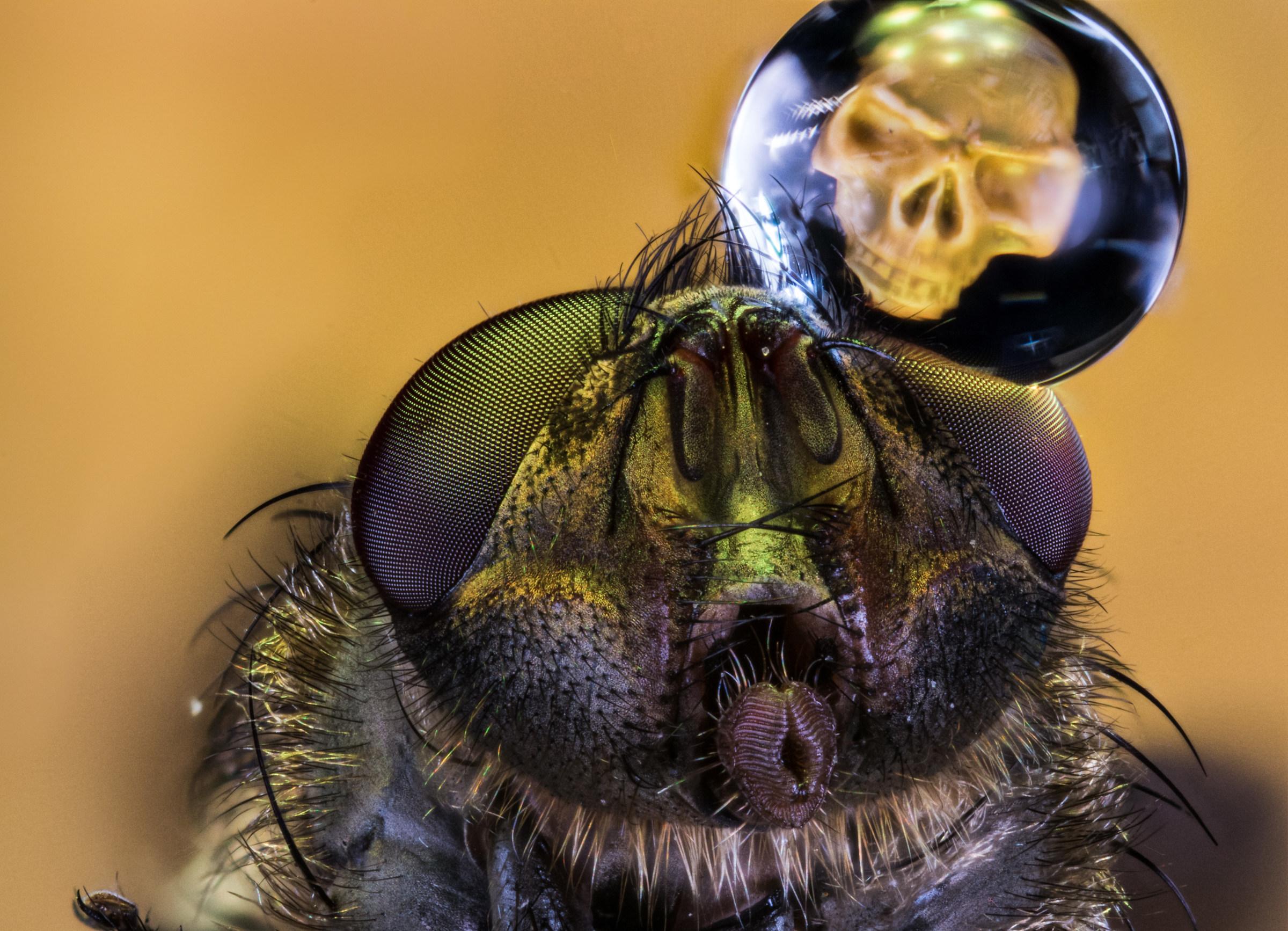 Death on Dead Fly...