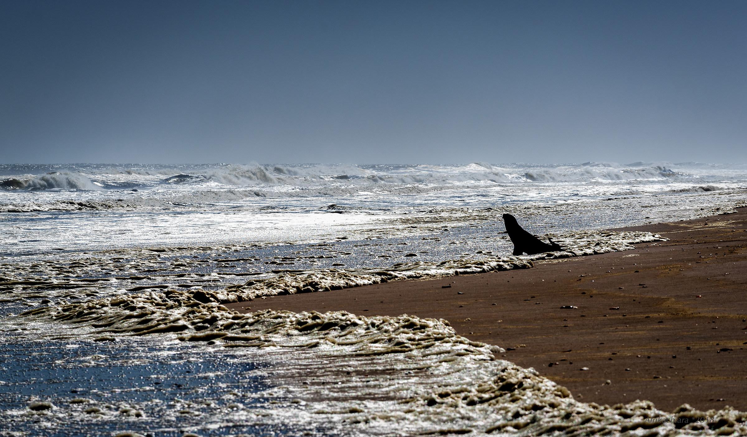 Io e l'Oceano...