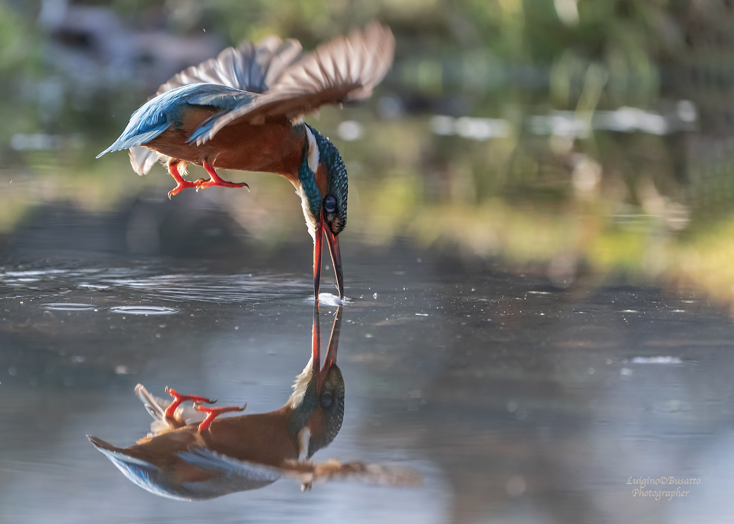 Kingfisher.. Mirror...