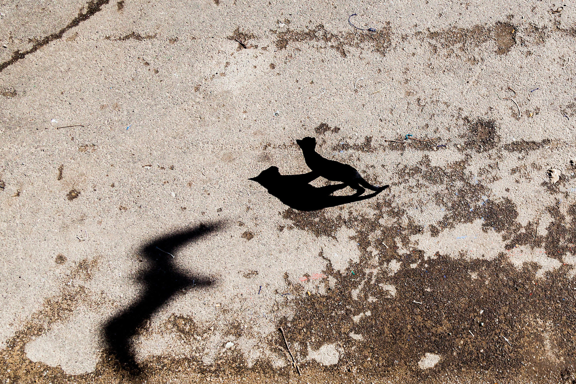 Question of Shadows...
