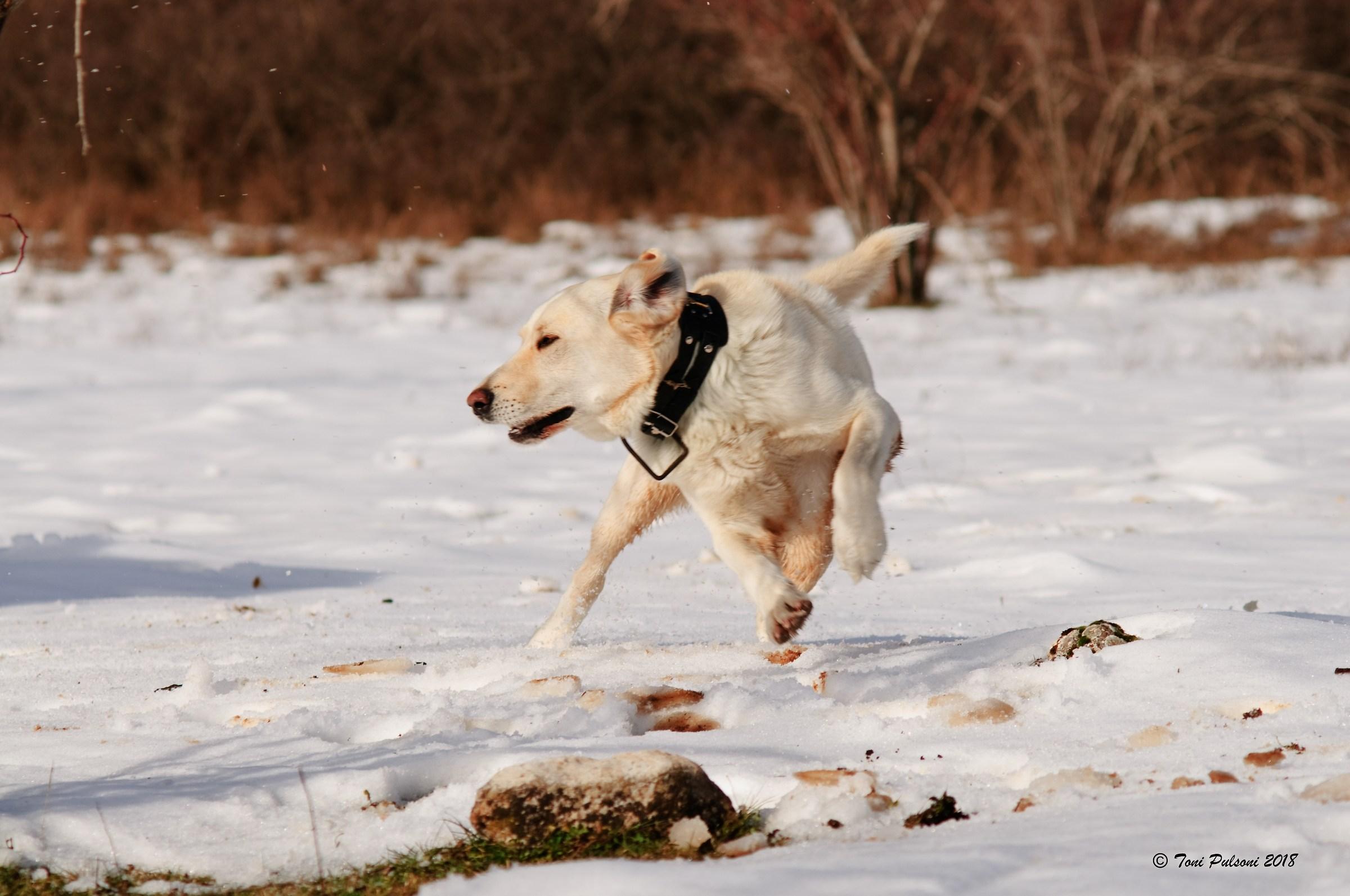 Canine Agility...