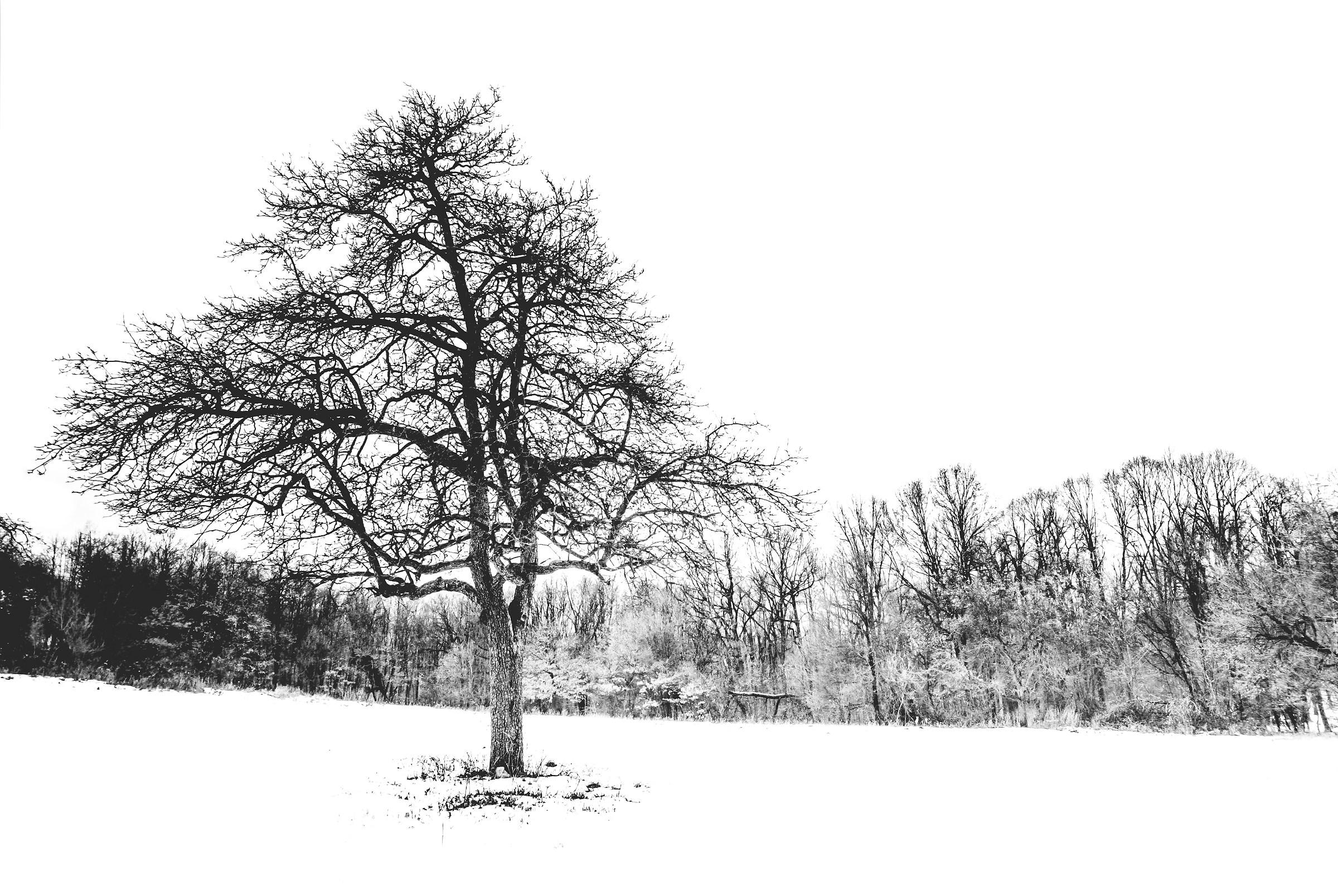 Winter Mecsek...