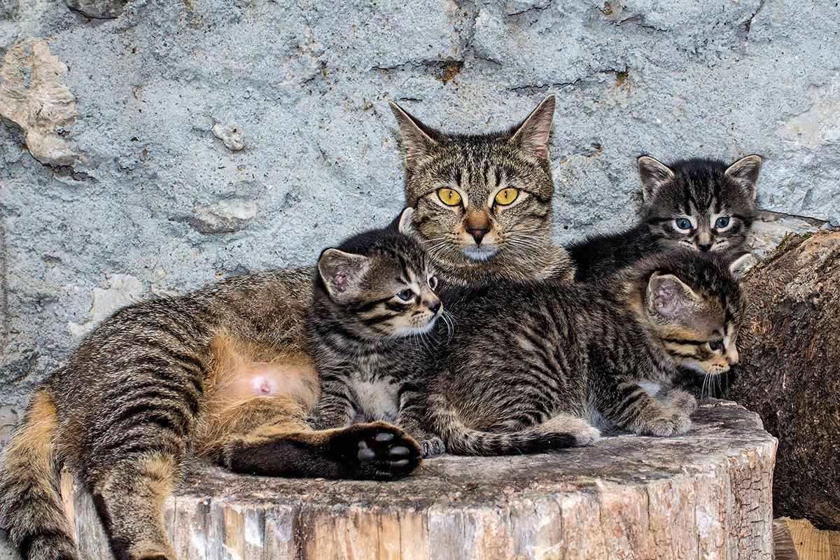 Kitten with Kittens...
